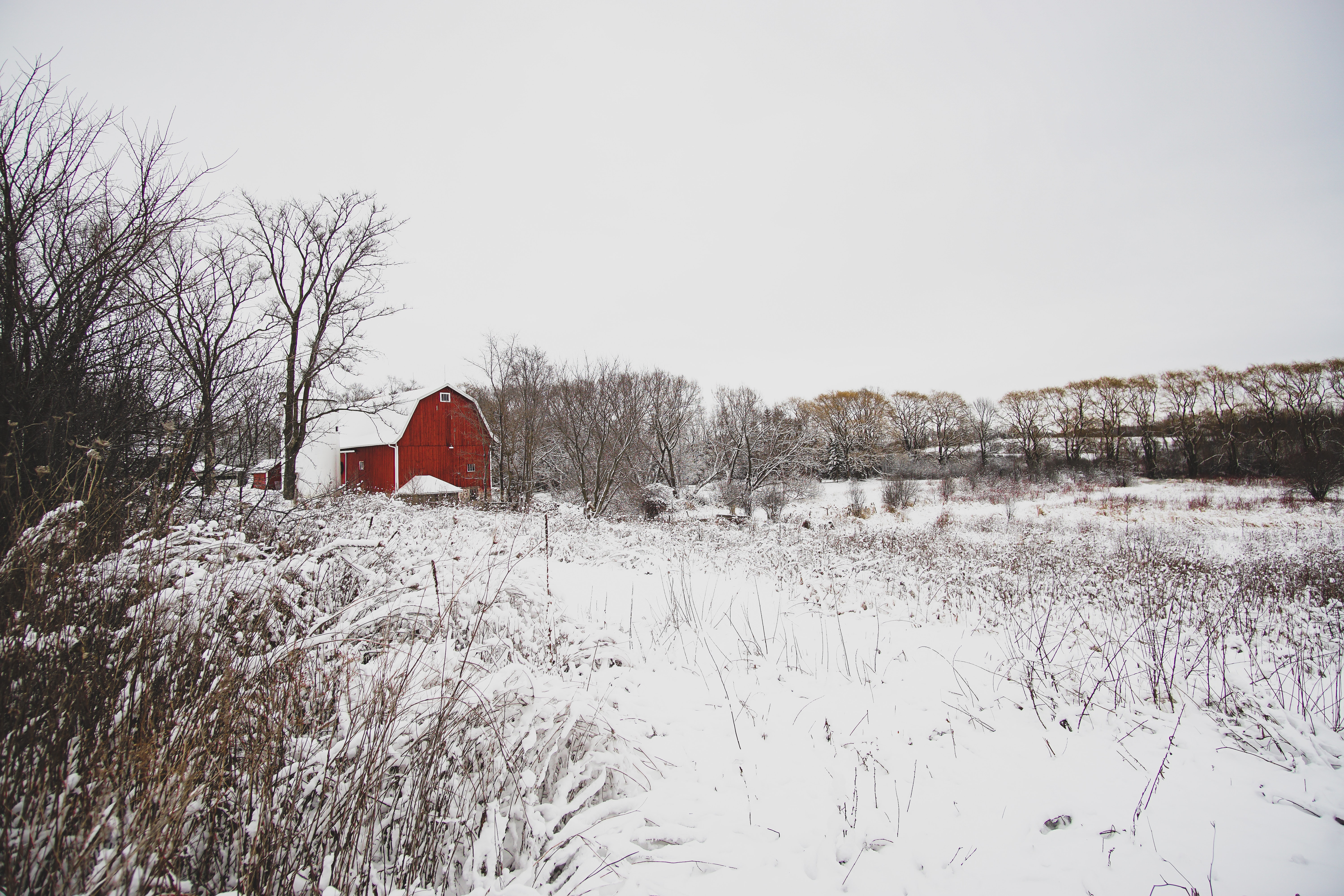 red house surrounded with snow and trees