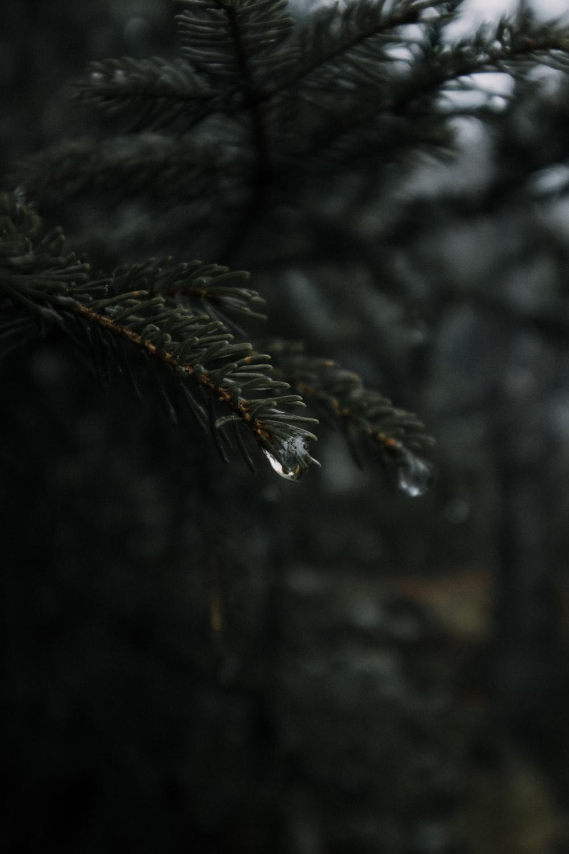 shallow focus of raindrop