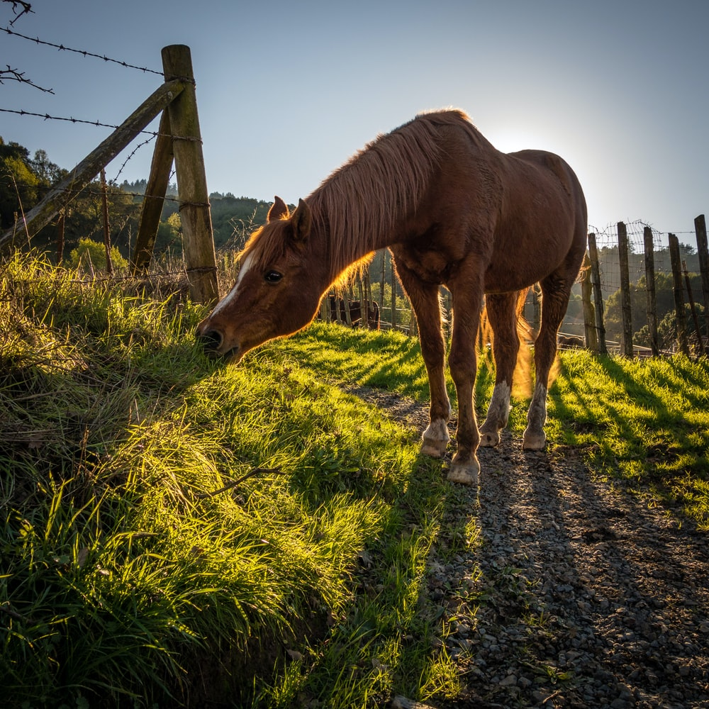brown horse beside barbwire fence