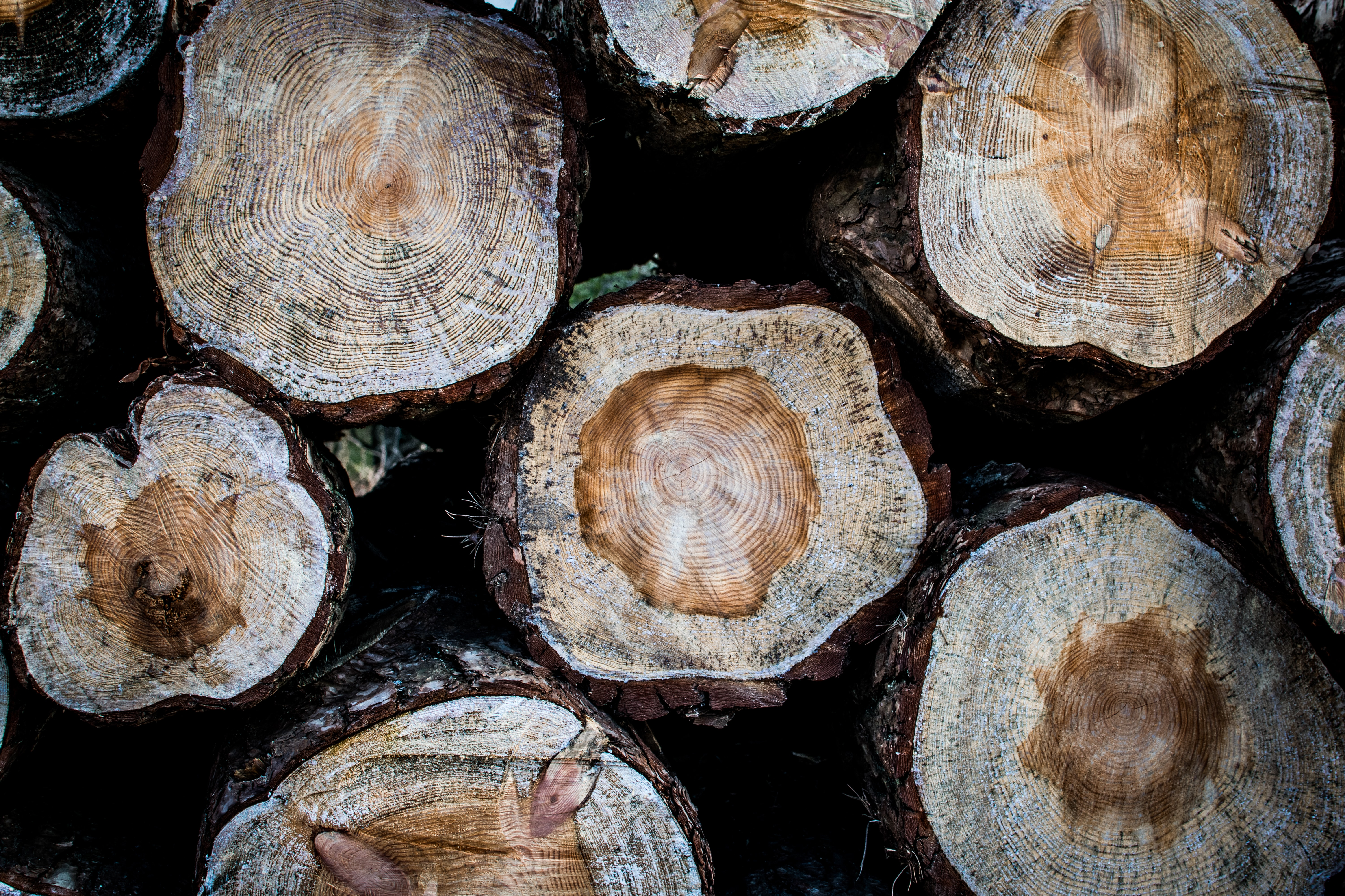 photo of wood logs