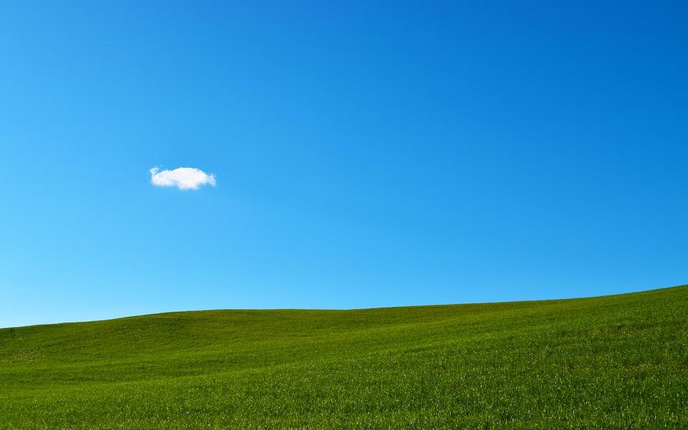 green grass field under blue sky