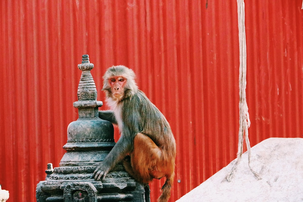 monkey on gray metal storage