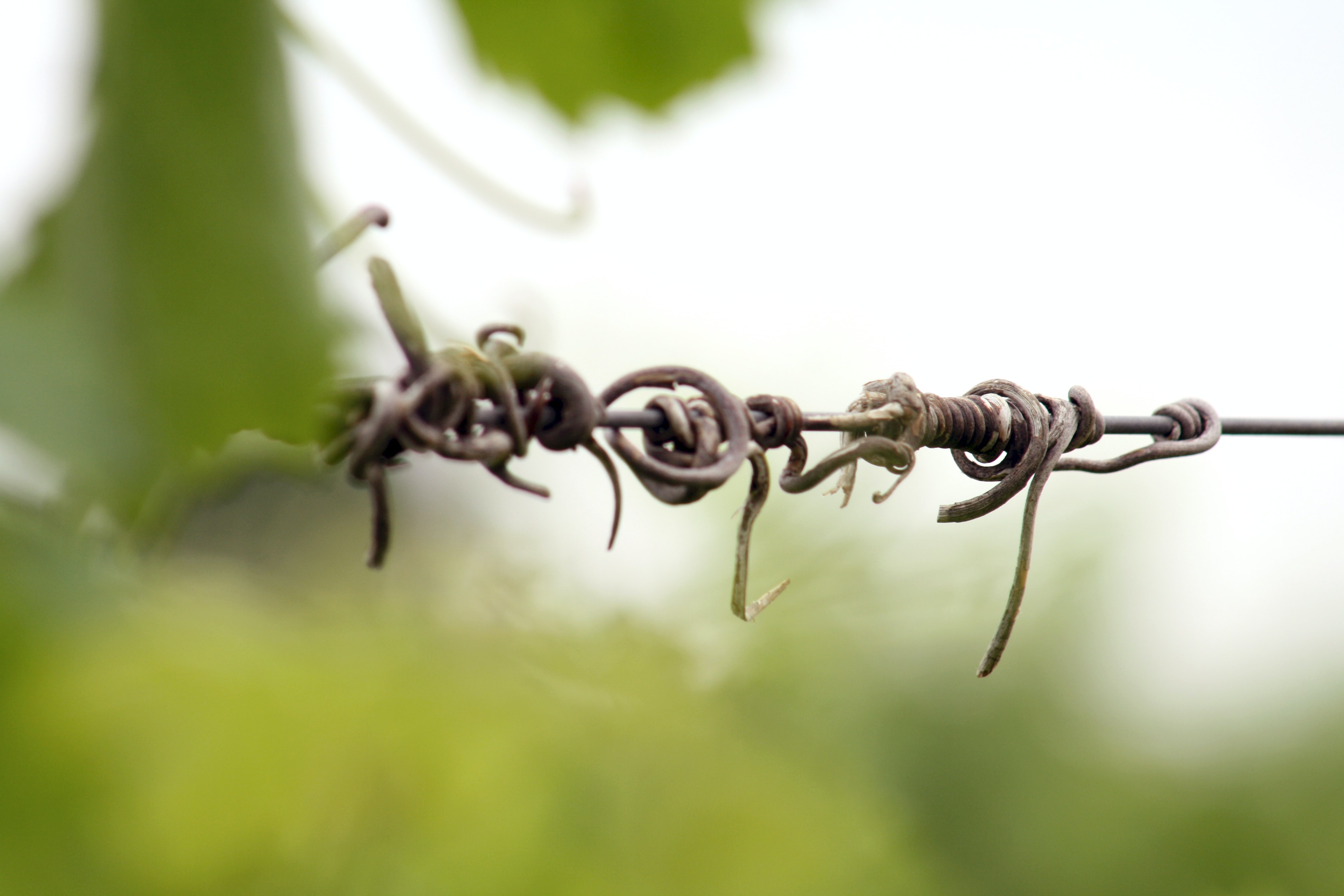 shallow focus photography of vines on steel wire