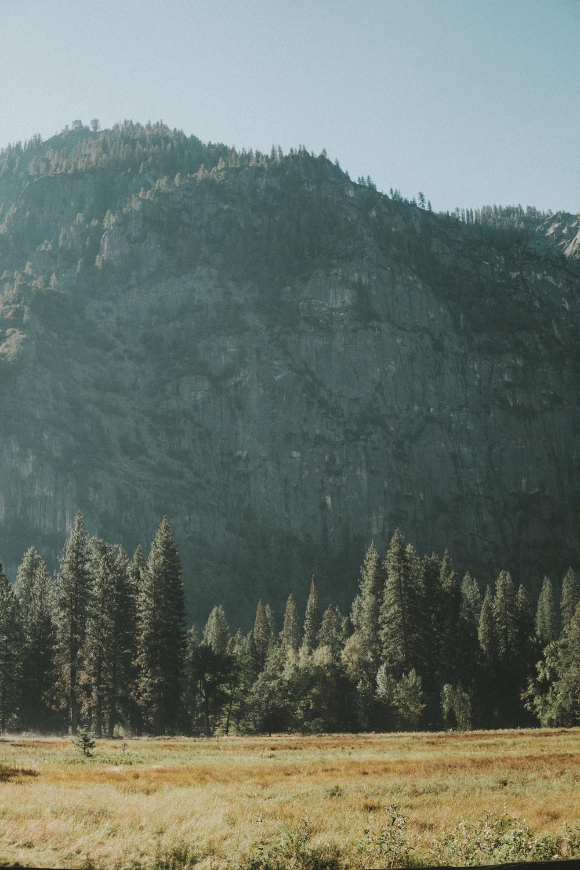 photo of pine trees near mountain