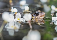 brown frog in body of water