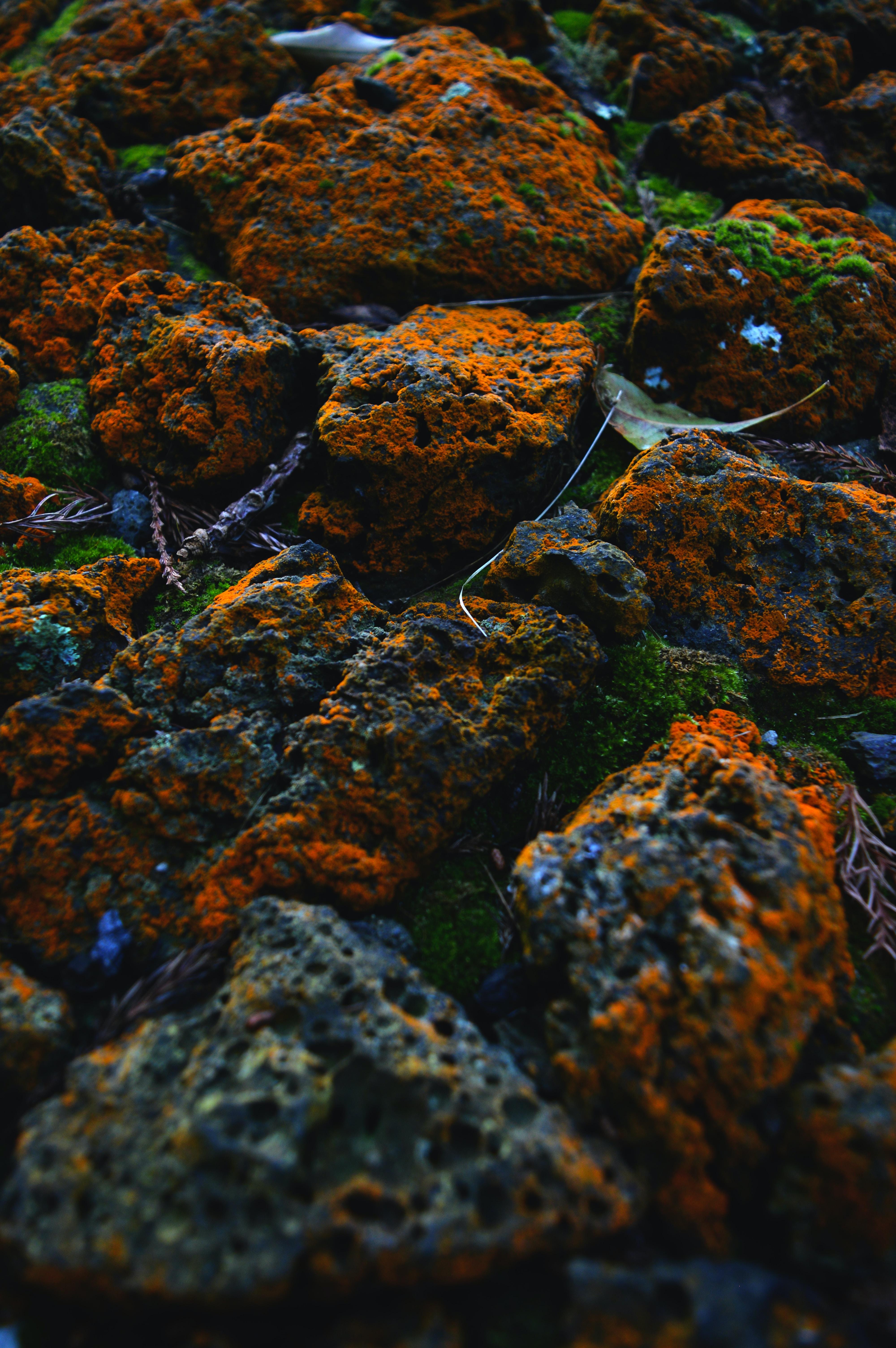closeup photo of stones