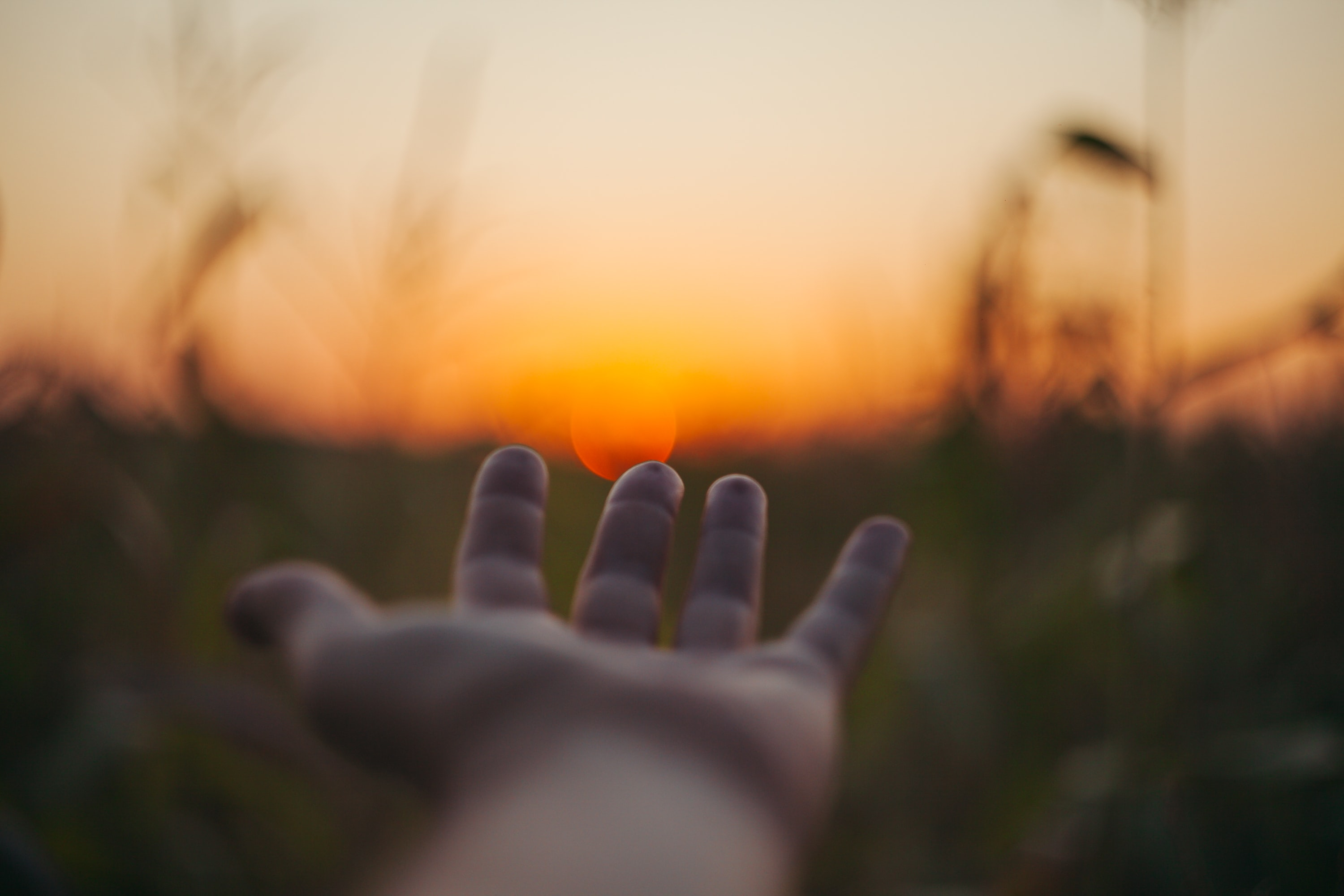 selective focus photo of person laying hand over the sunset