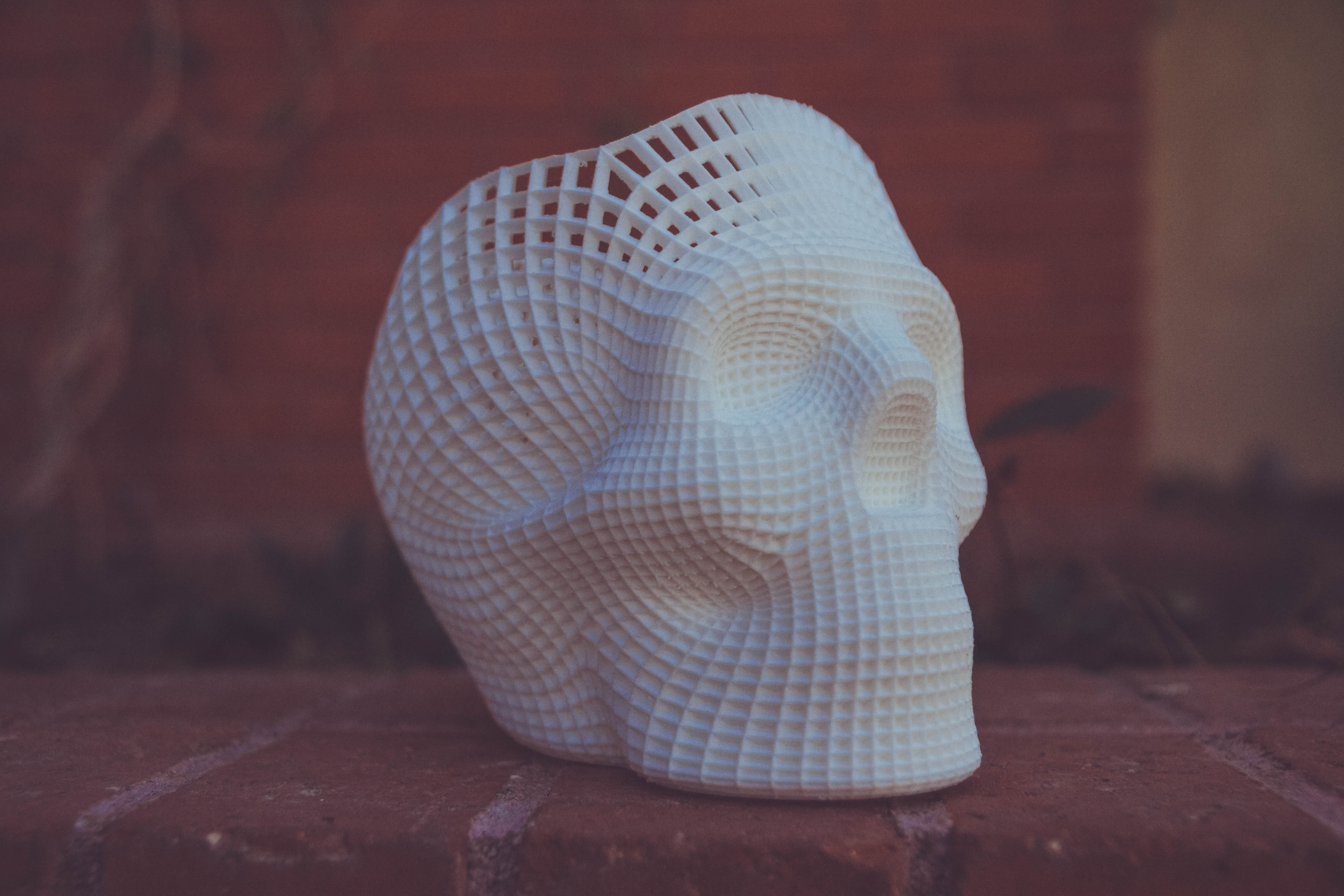white human skull 3D artwork