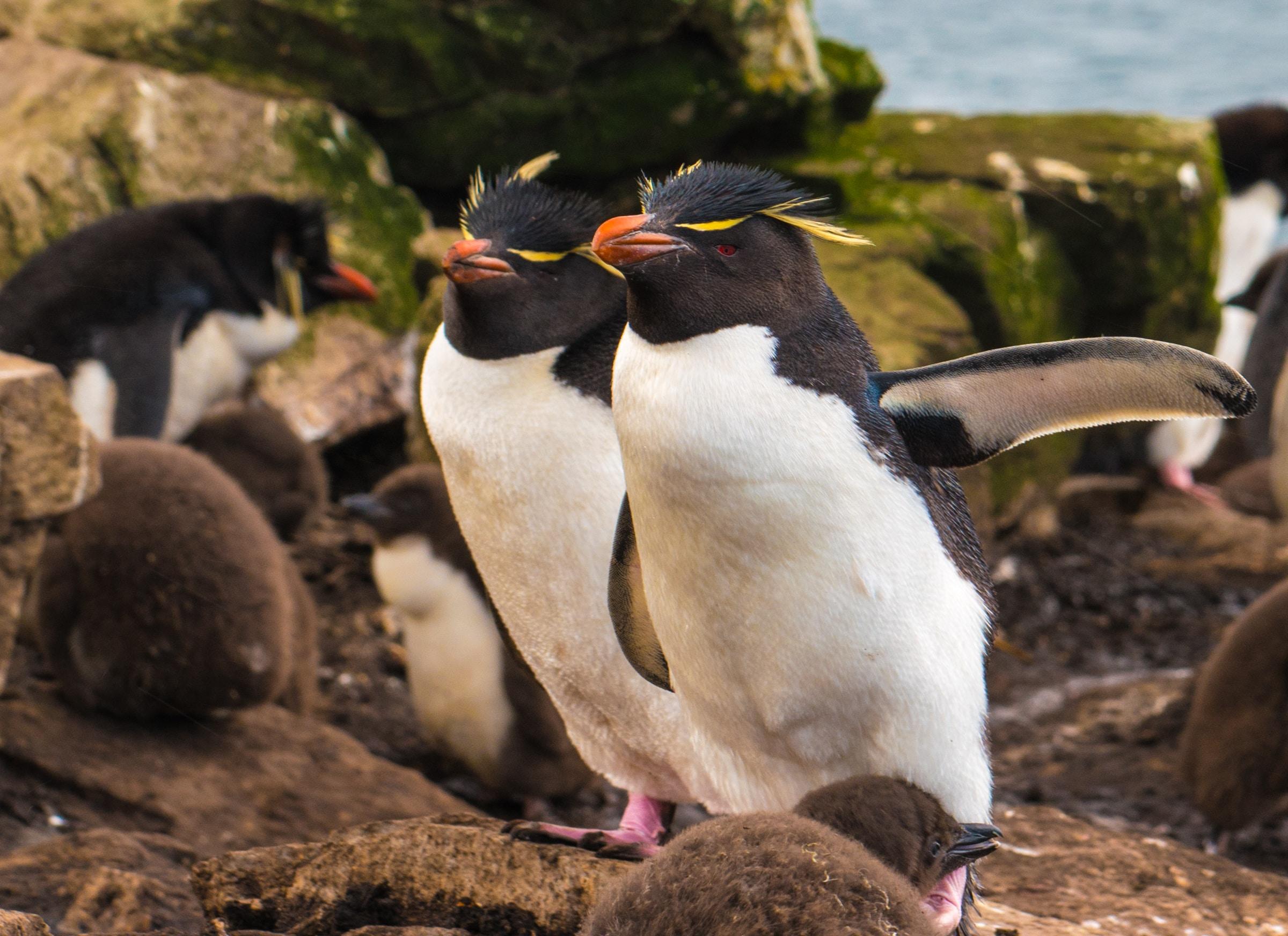two white penguins walking near each other near sea