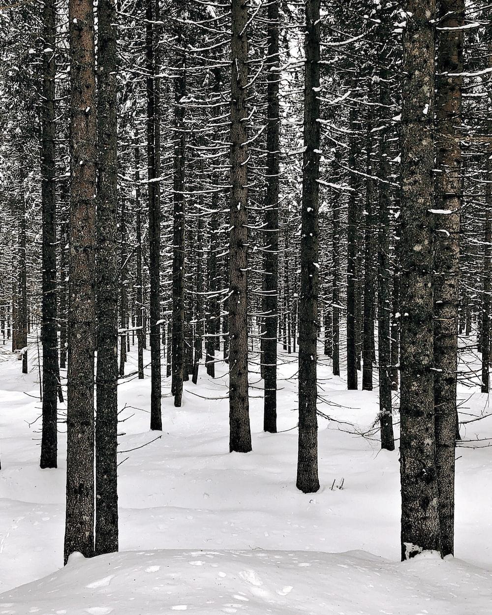 photo of leafless trees