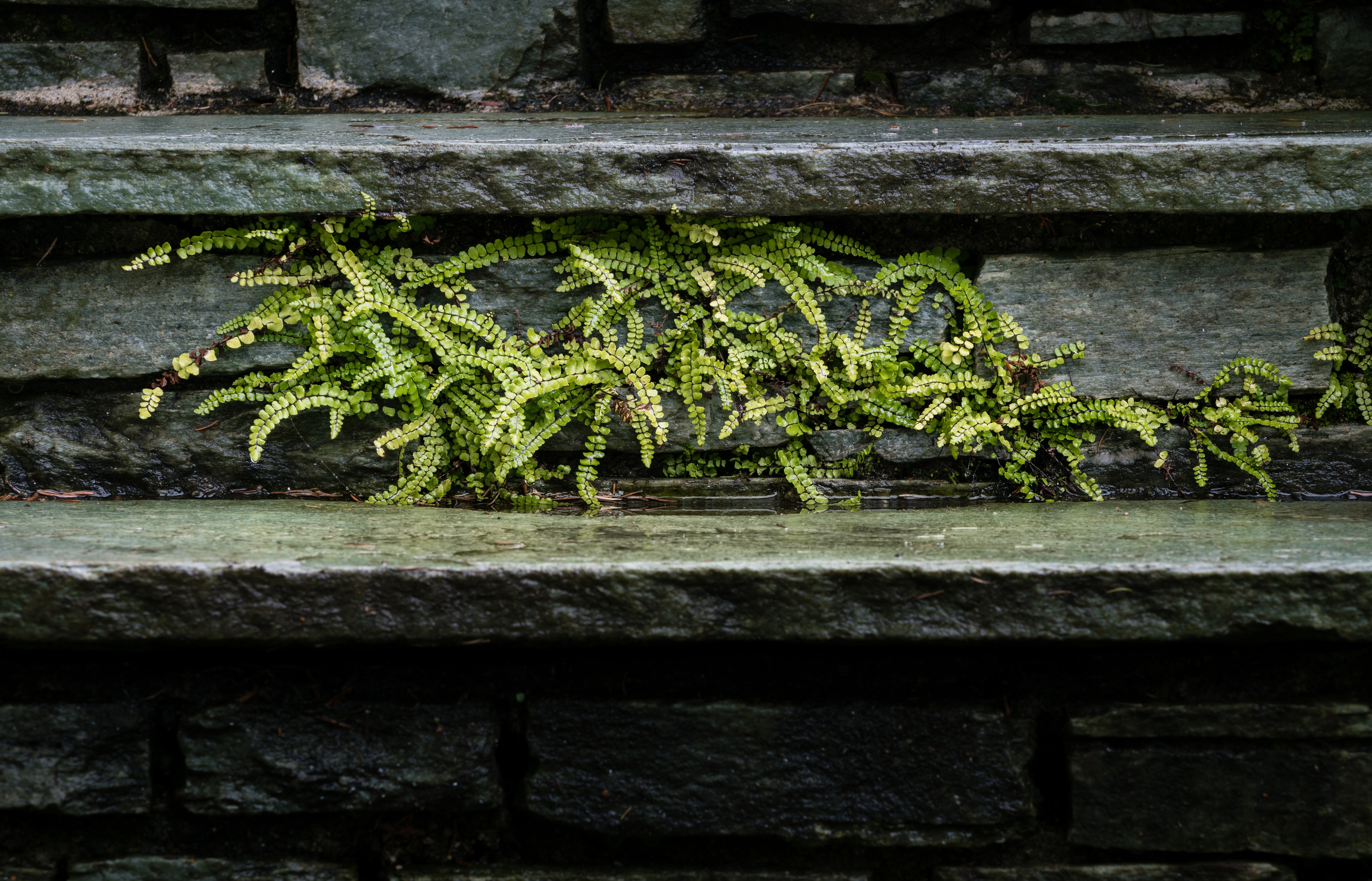 green fern plant on gray concrete wall