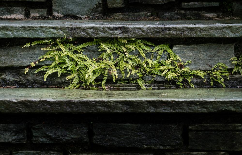 green fern plant on gray concrete wall