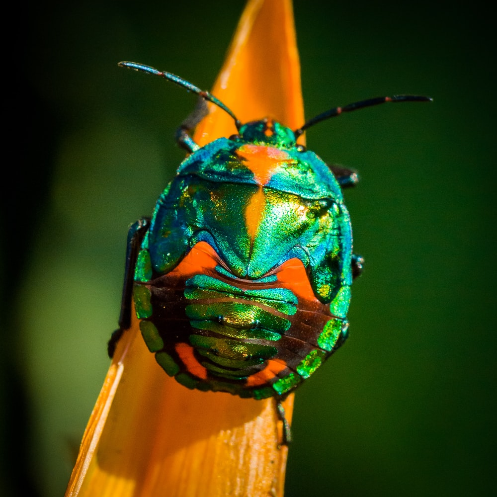 green and orange bug