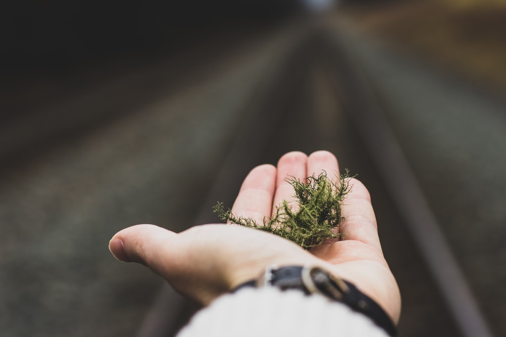 person holding green plant