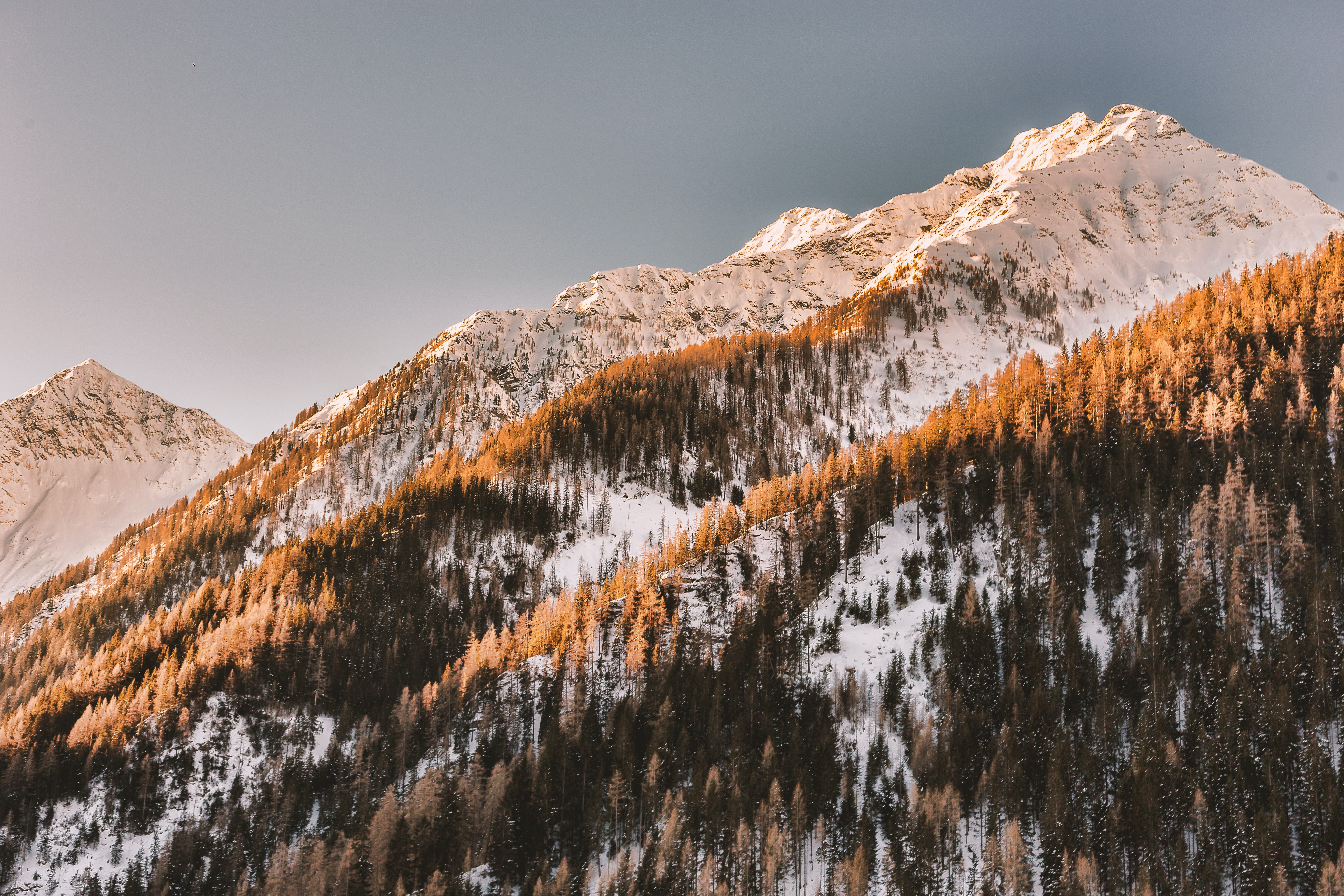 trees covered mountain