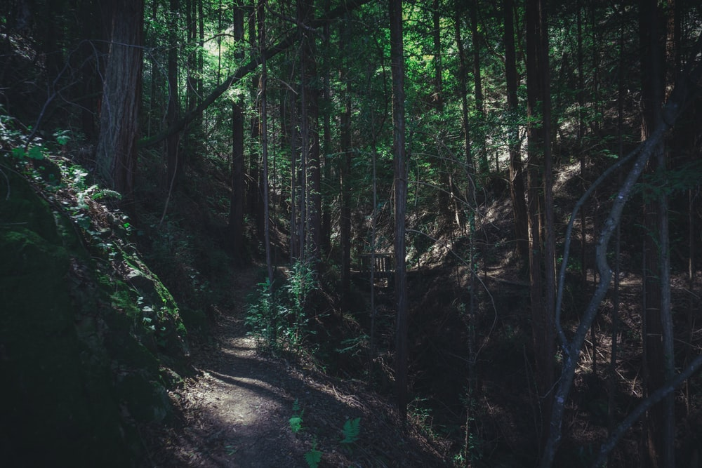Creepy Forest Pictures Download Free Images On Unsplash
