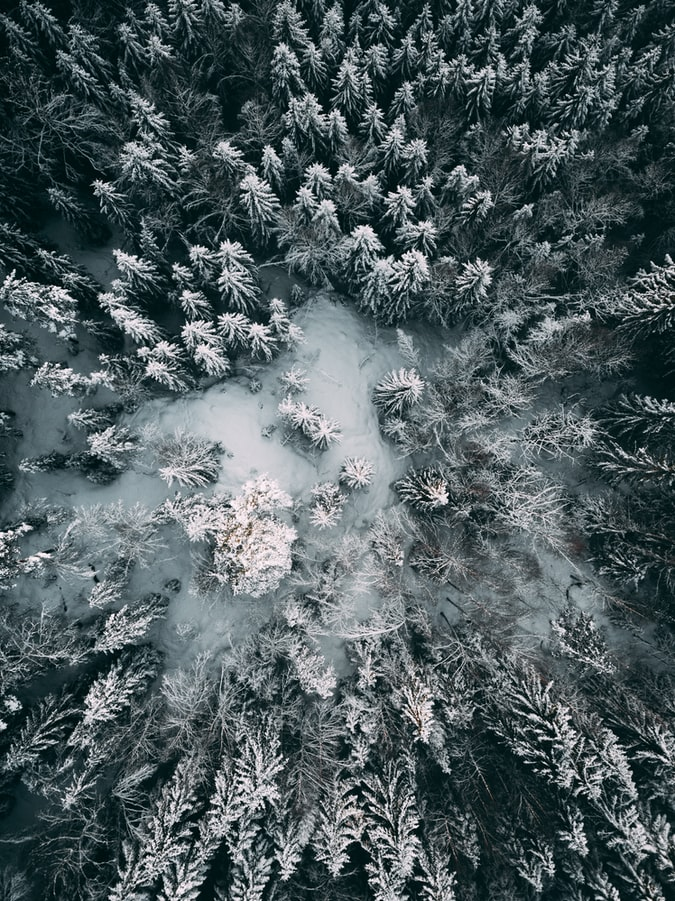 Snow-covered trees in Oslo