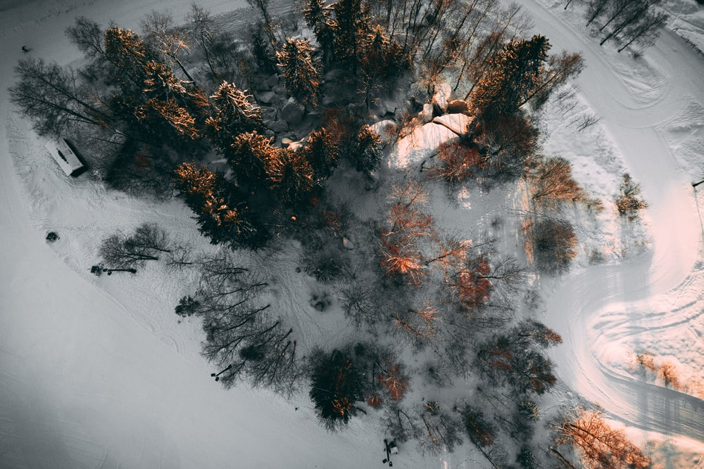 aerial photo of trees between snow covered pathway