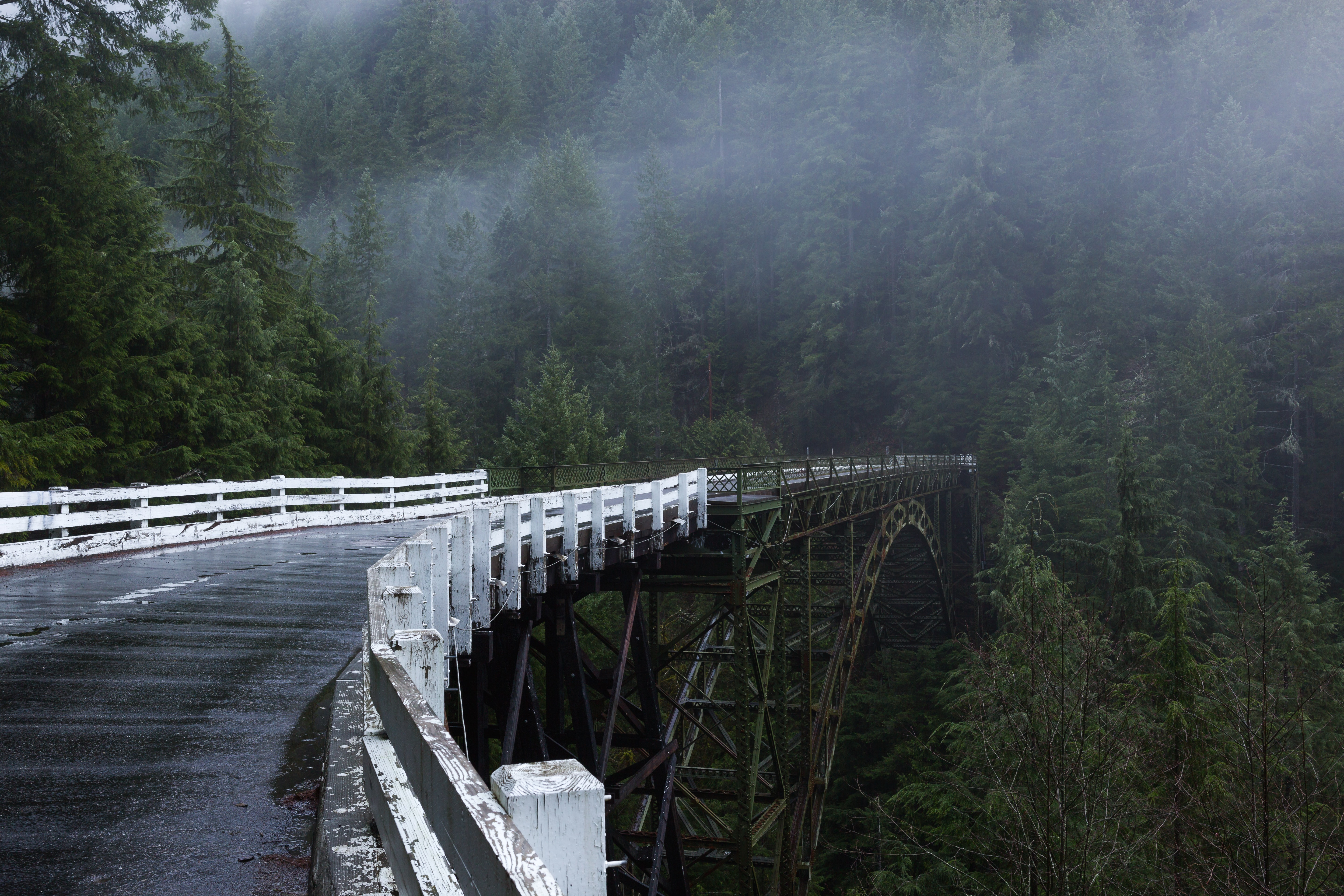bridge towards mountain with trees during foggy daytime