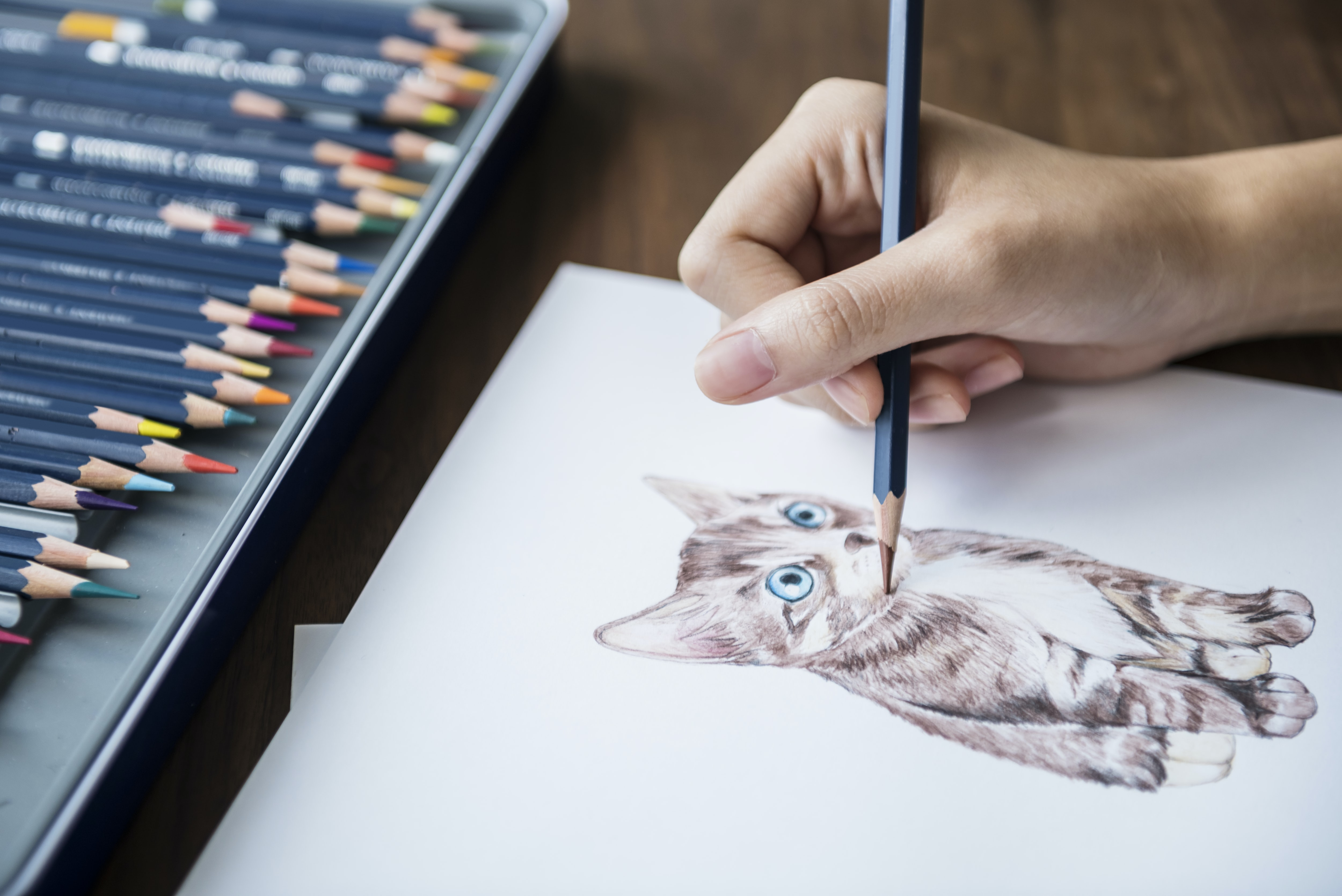 photo of person drawing gray kitten