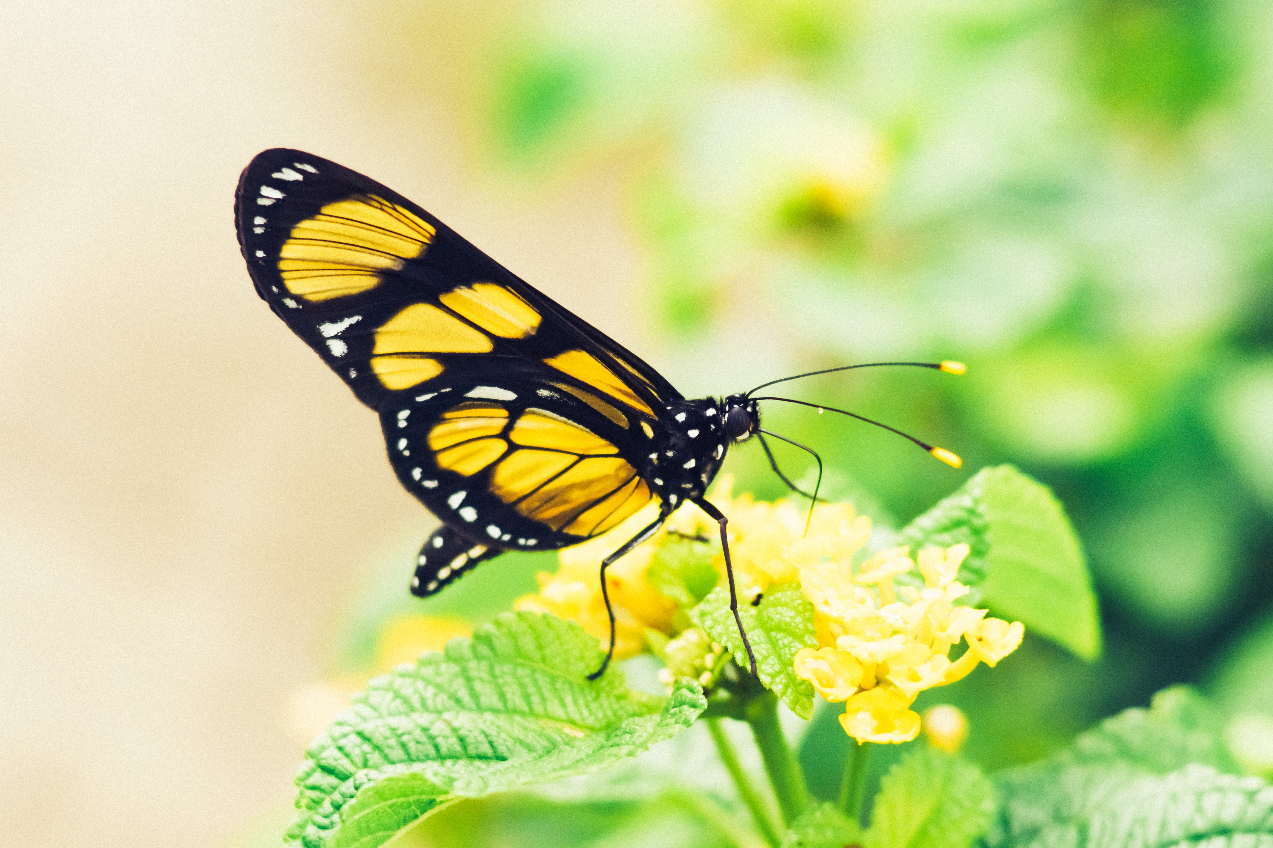 shallow focus photography of yellow butterfly