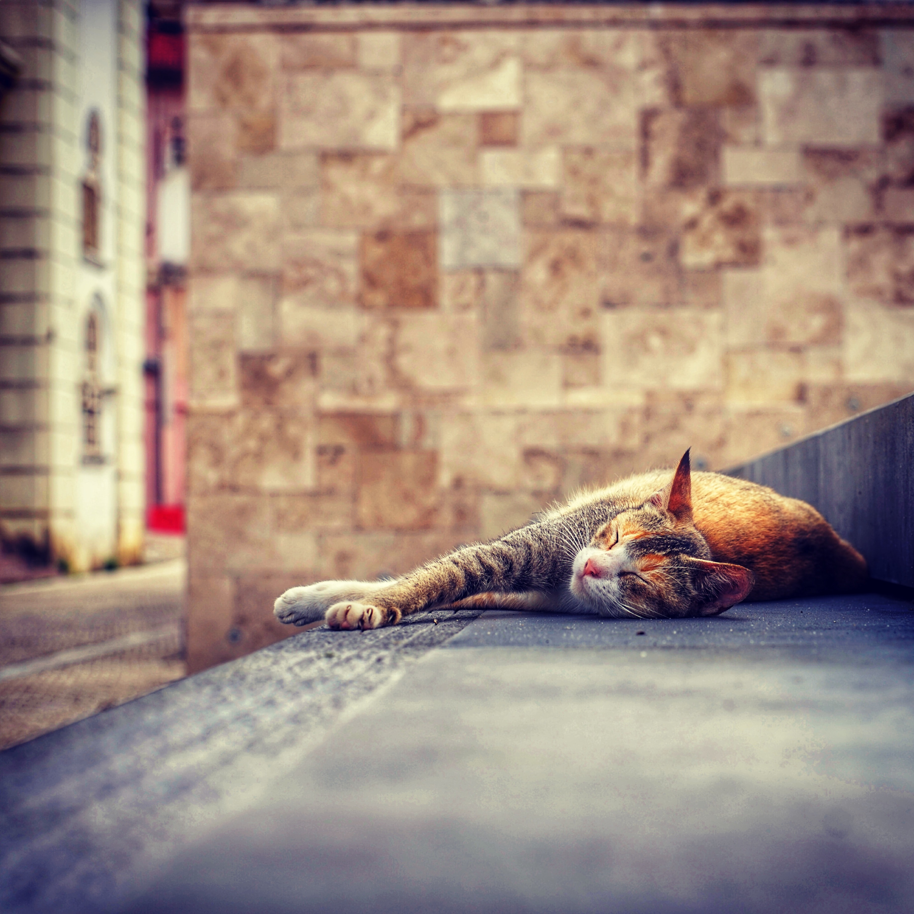 cat lying down on stairs