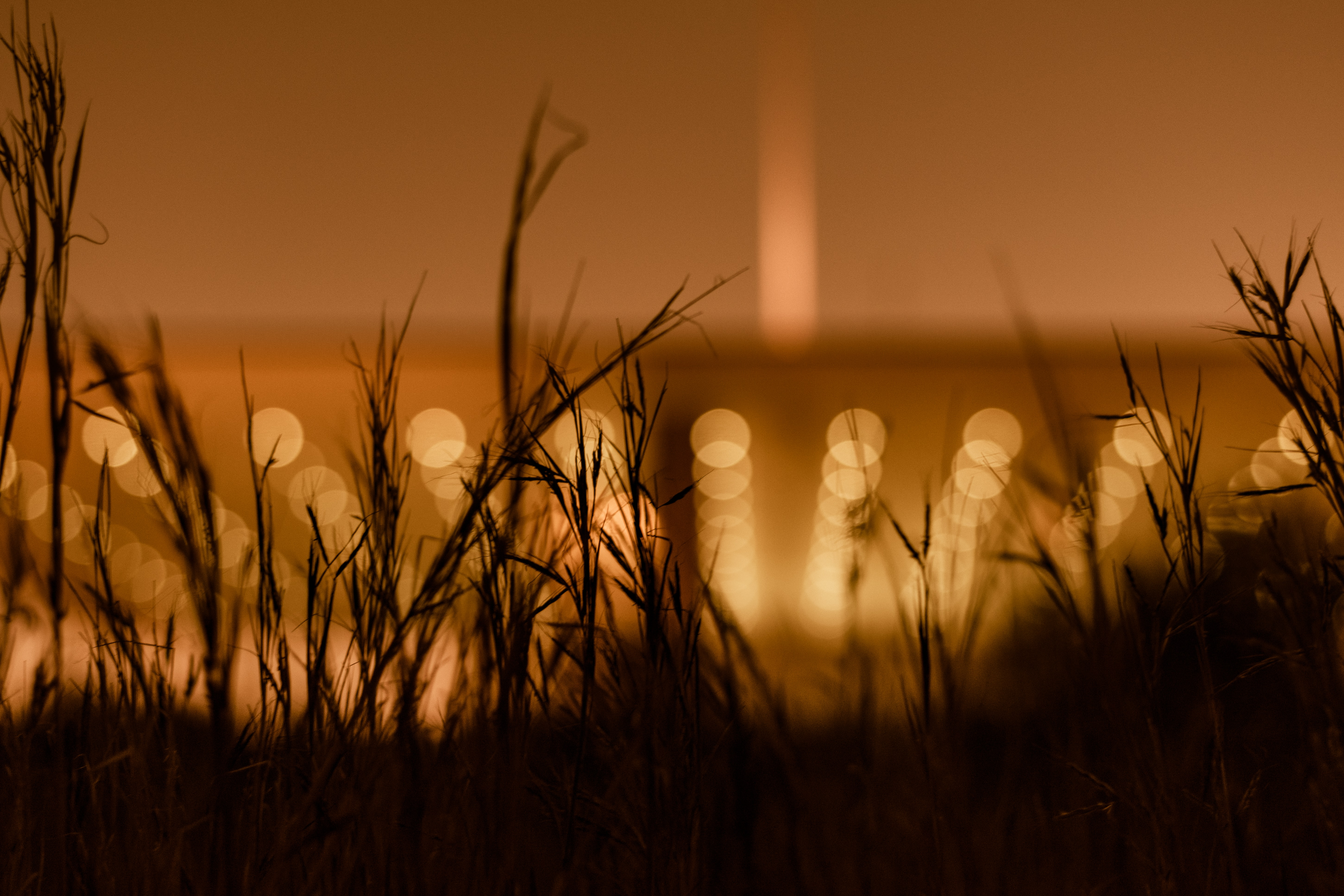 silhouette of grass with yellow bokeh lights