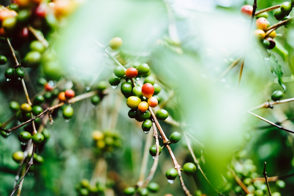 shallow focus photography of coffee bean