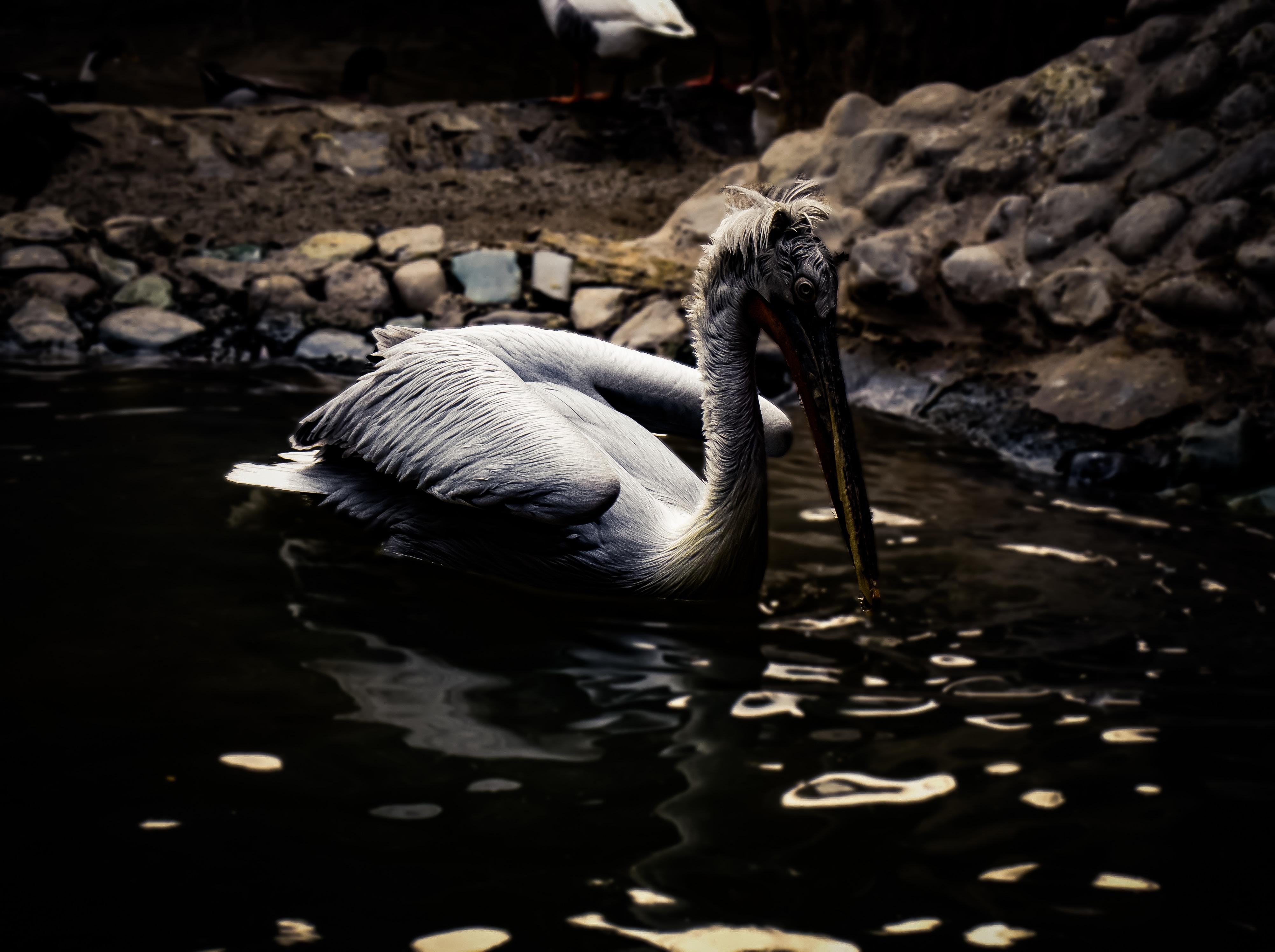 white and gray bird of lake water