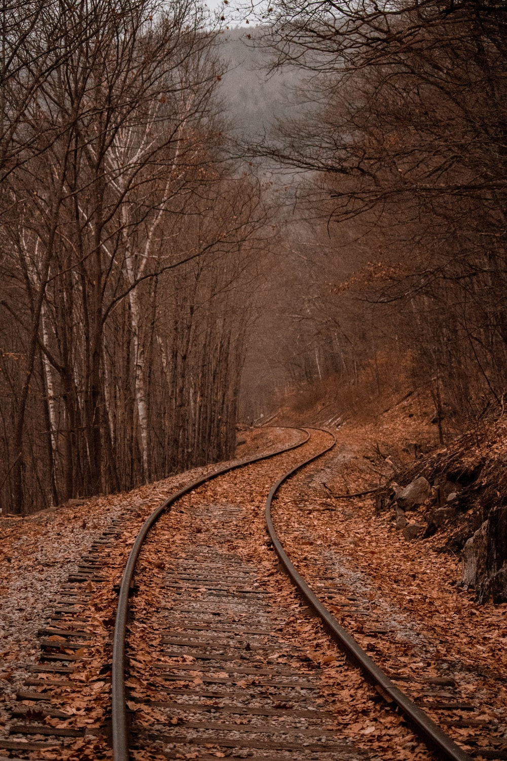 landscape photography of train rails between forest