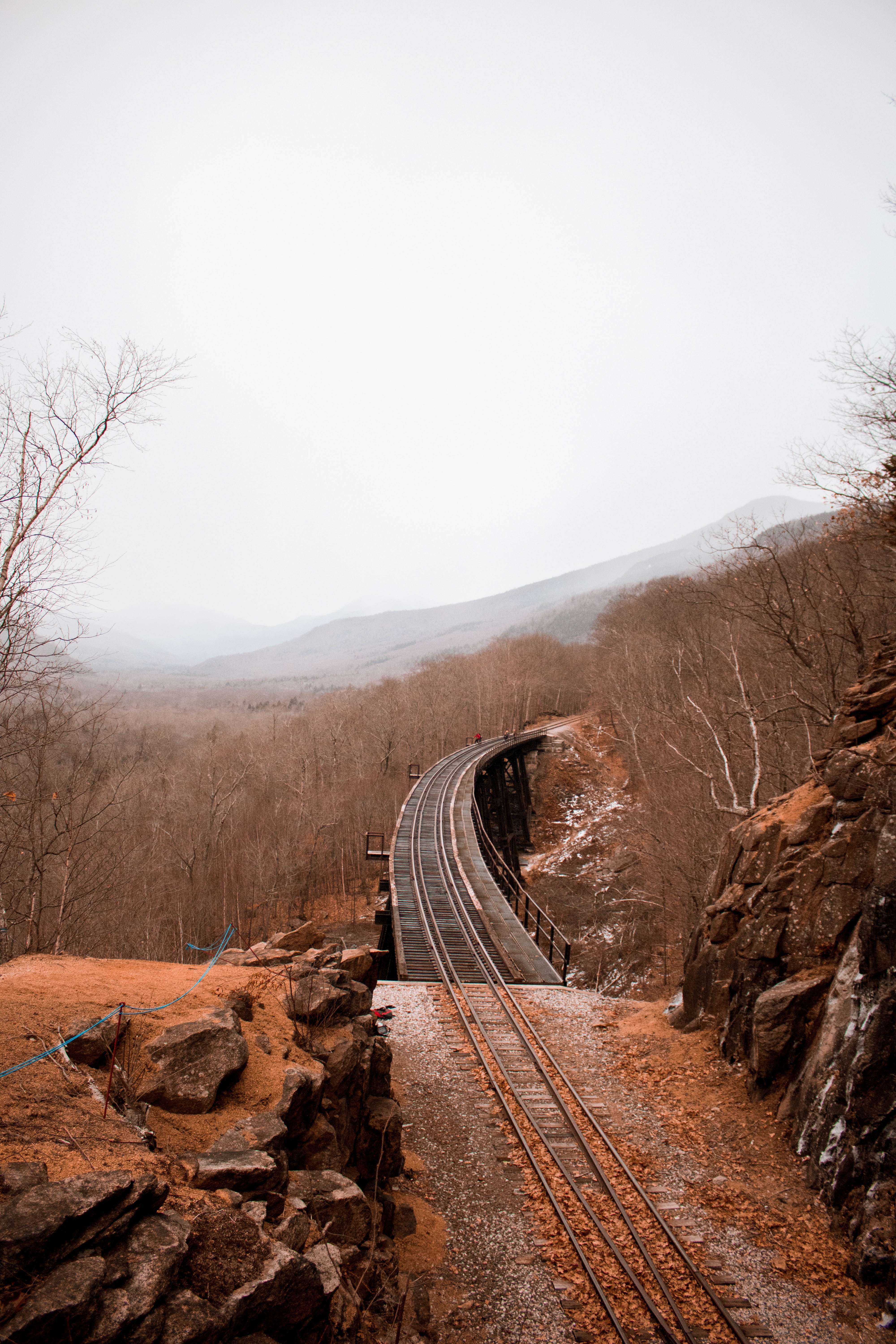 railway surrounded by bare trees during daytime