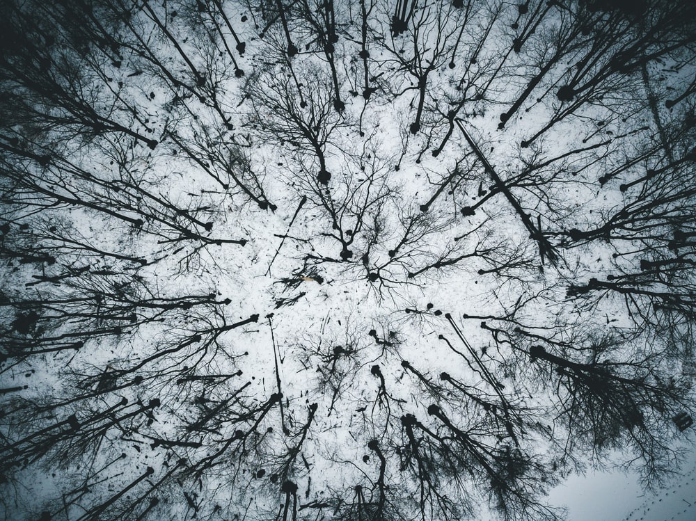 bird's eye view photography of bare trees