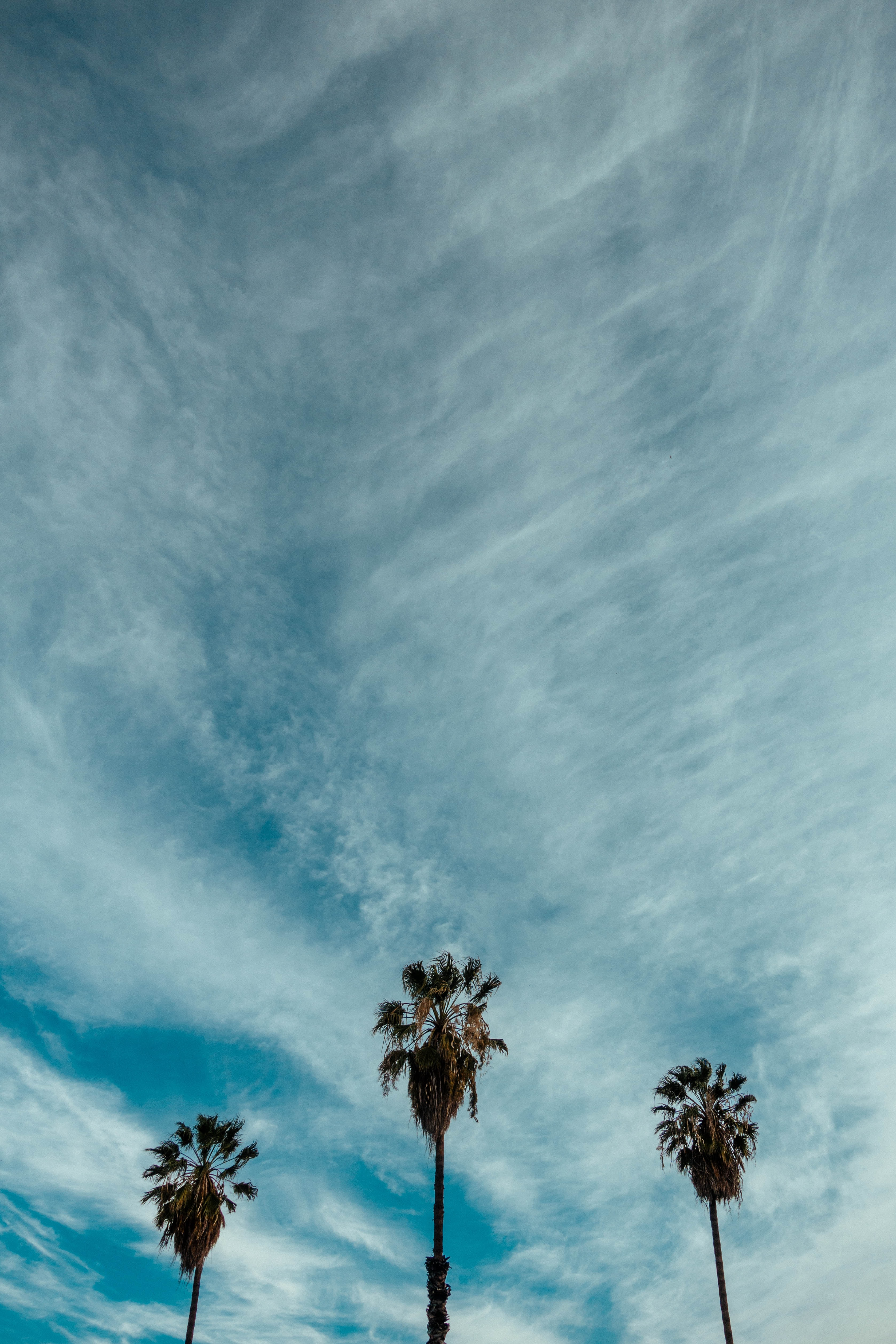 three palm trees under stratus clouds
