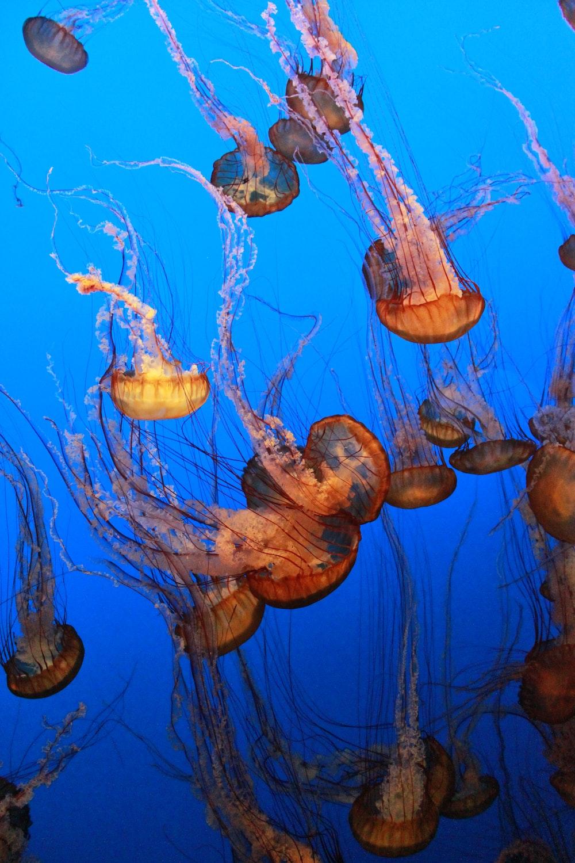 beige jellyfishes