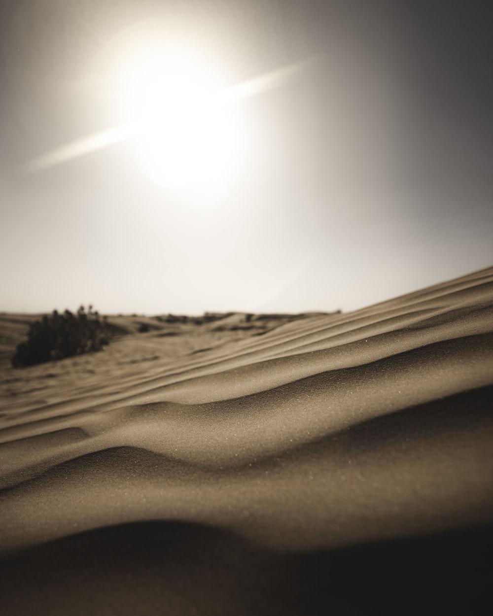 silhouette of plant on desert during daytime