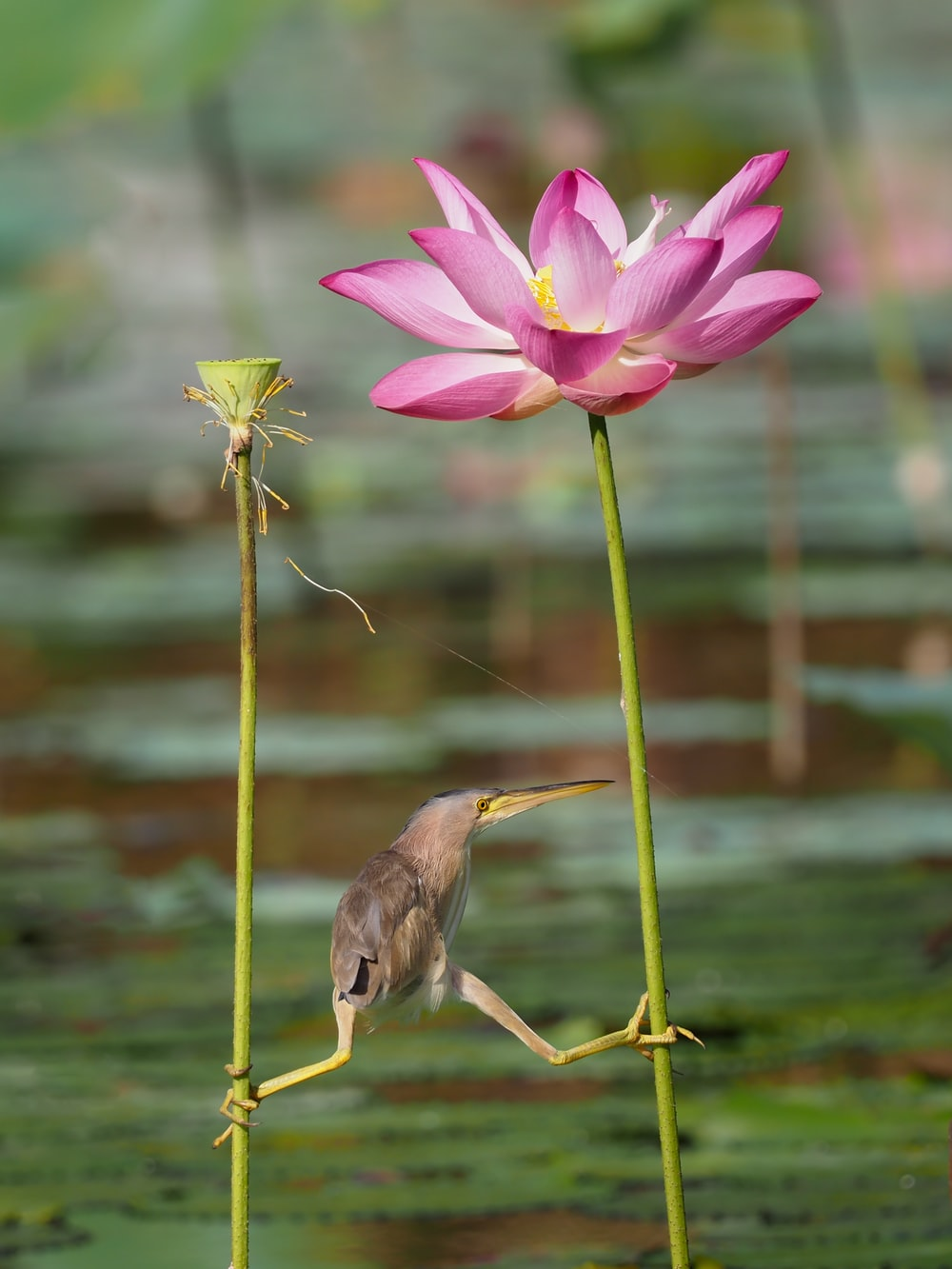 photo of bird holding his leg on pink petaled flower