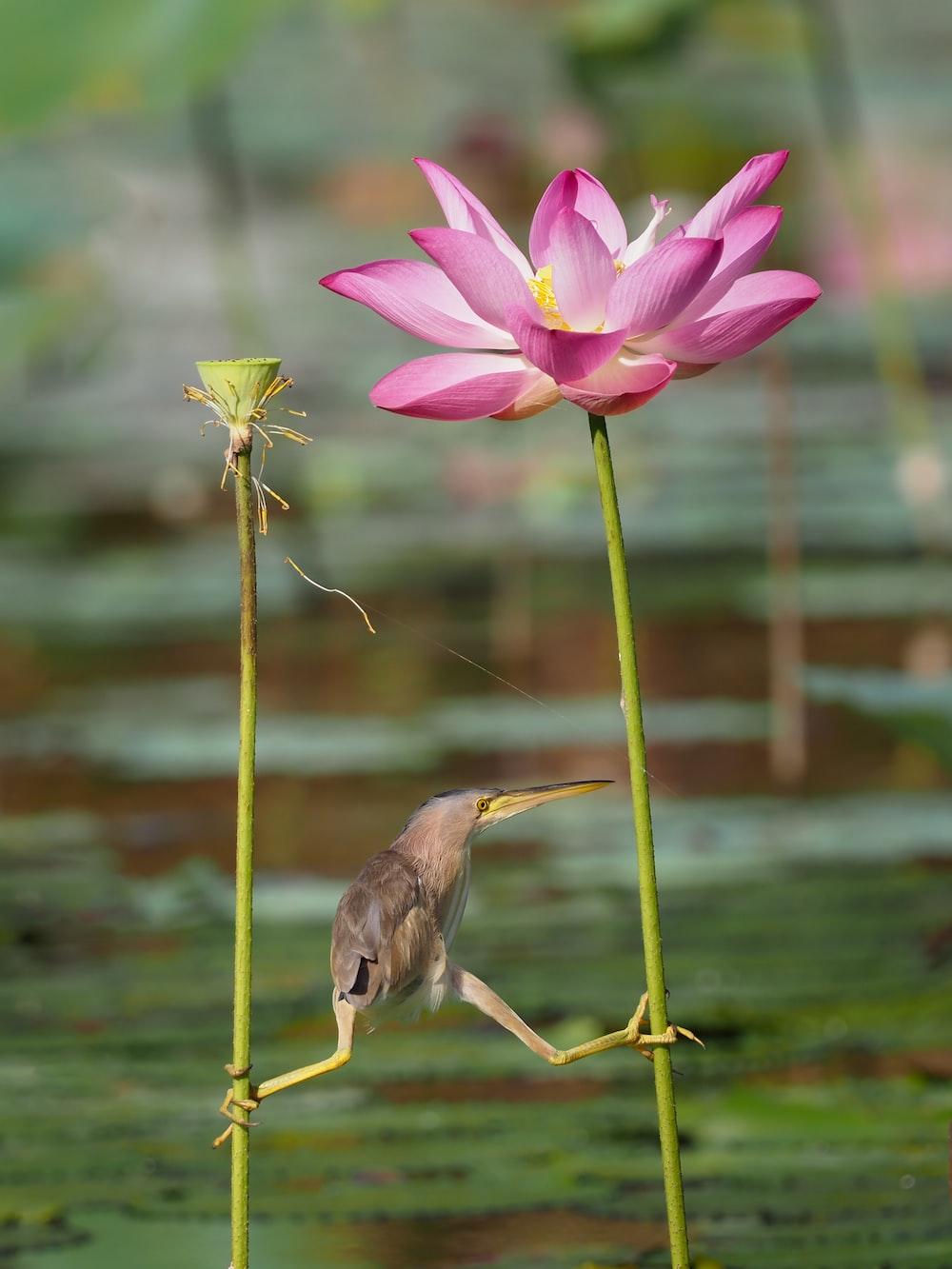 photo of bird holding his leg on pink petaled flower