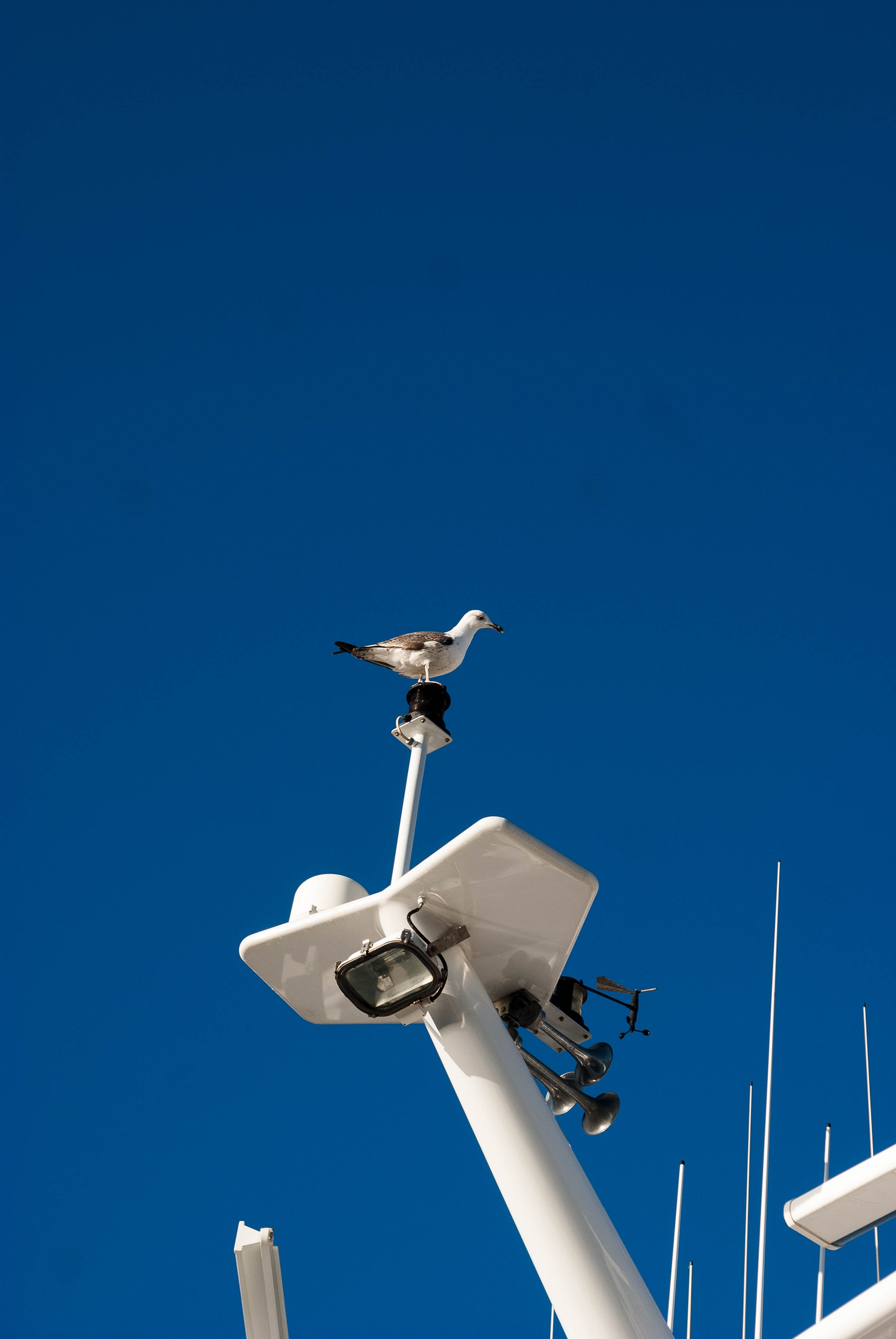white bird perching on white metal post under blue sky during daytime