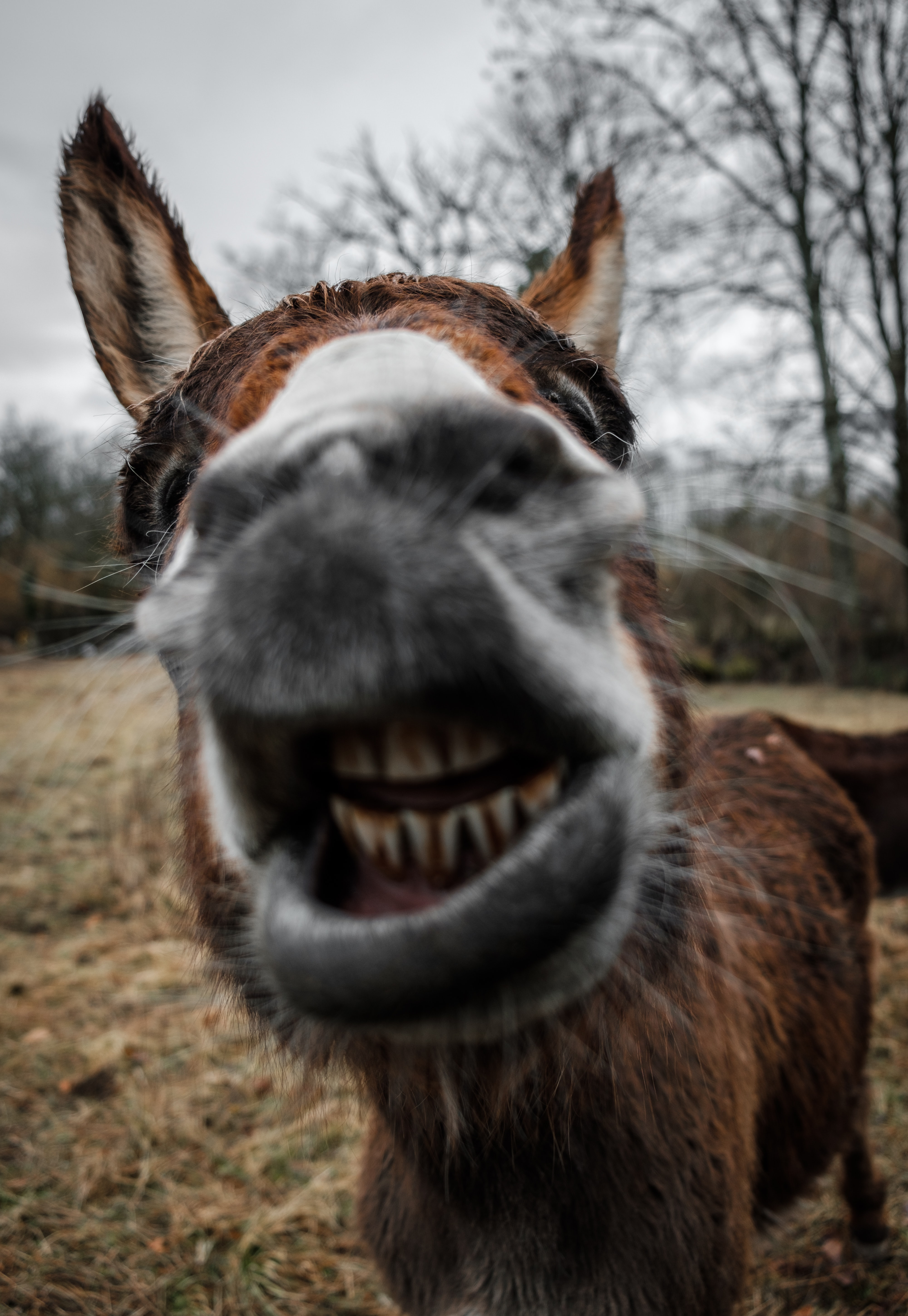 shallow focus photography of brown donkey