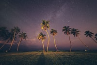 coconut trees under sky