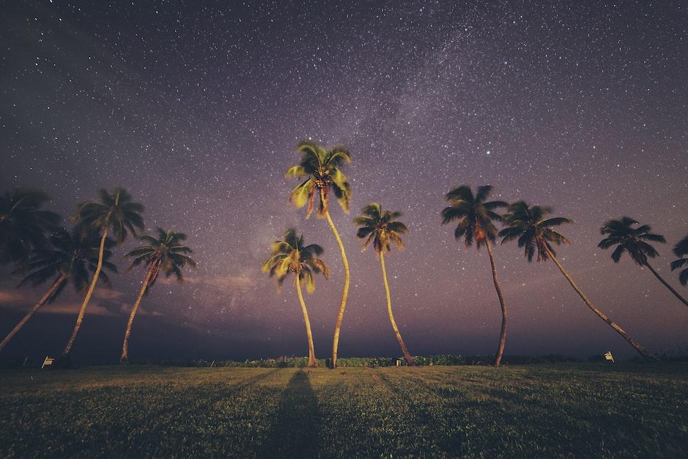 coconut trees under sky
