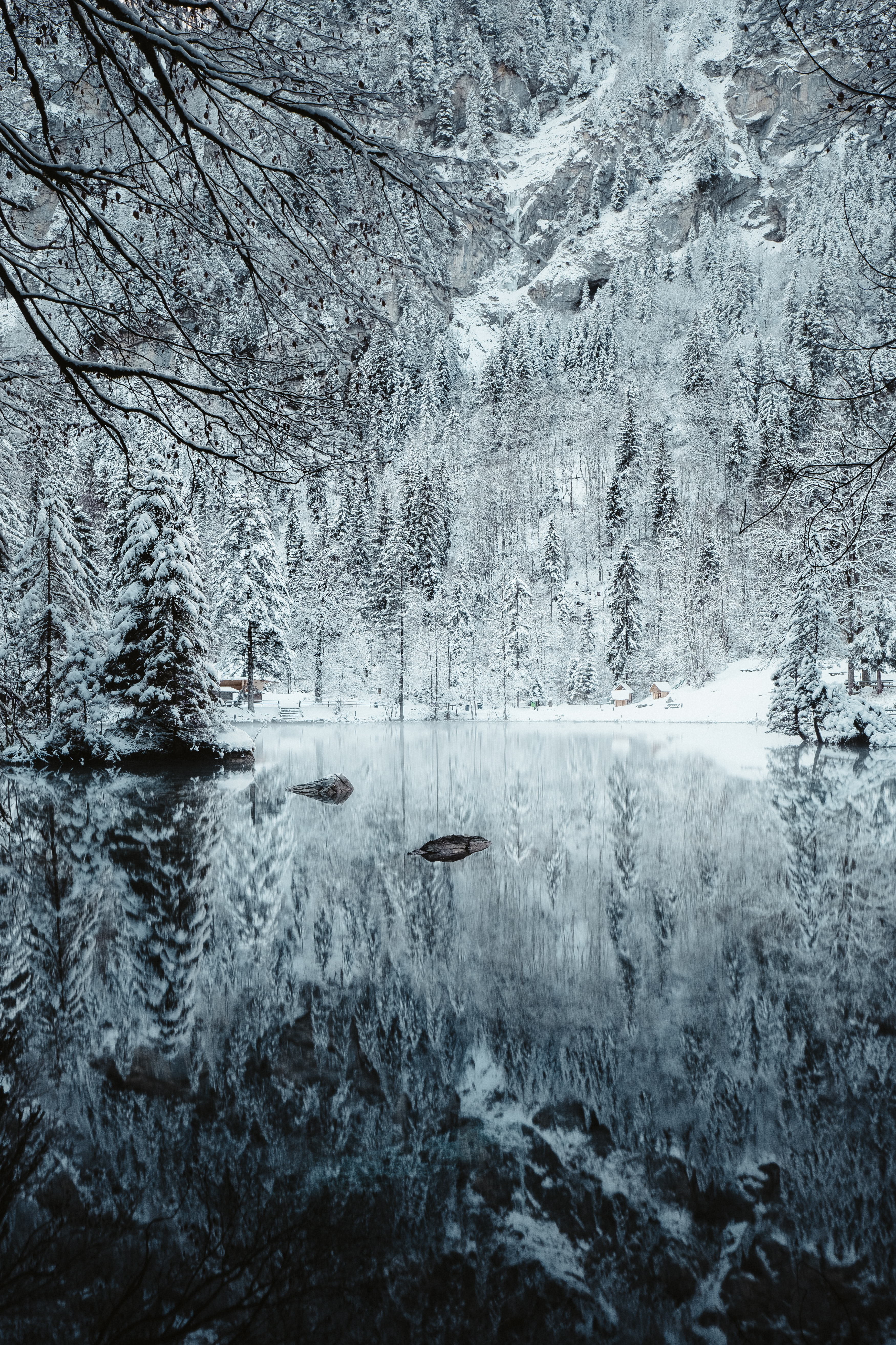 snow covered river and trees