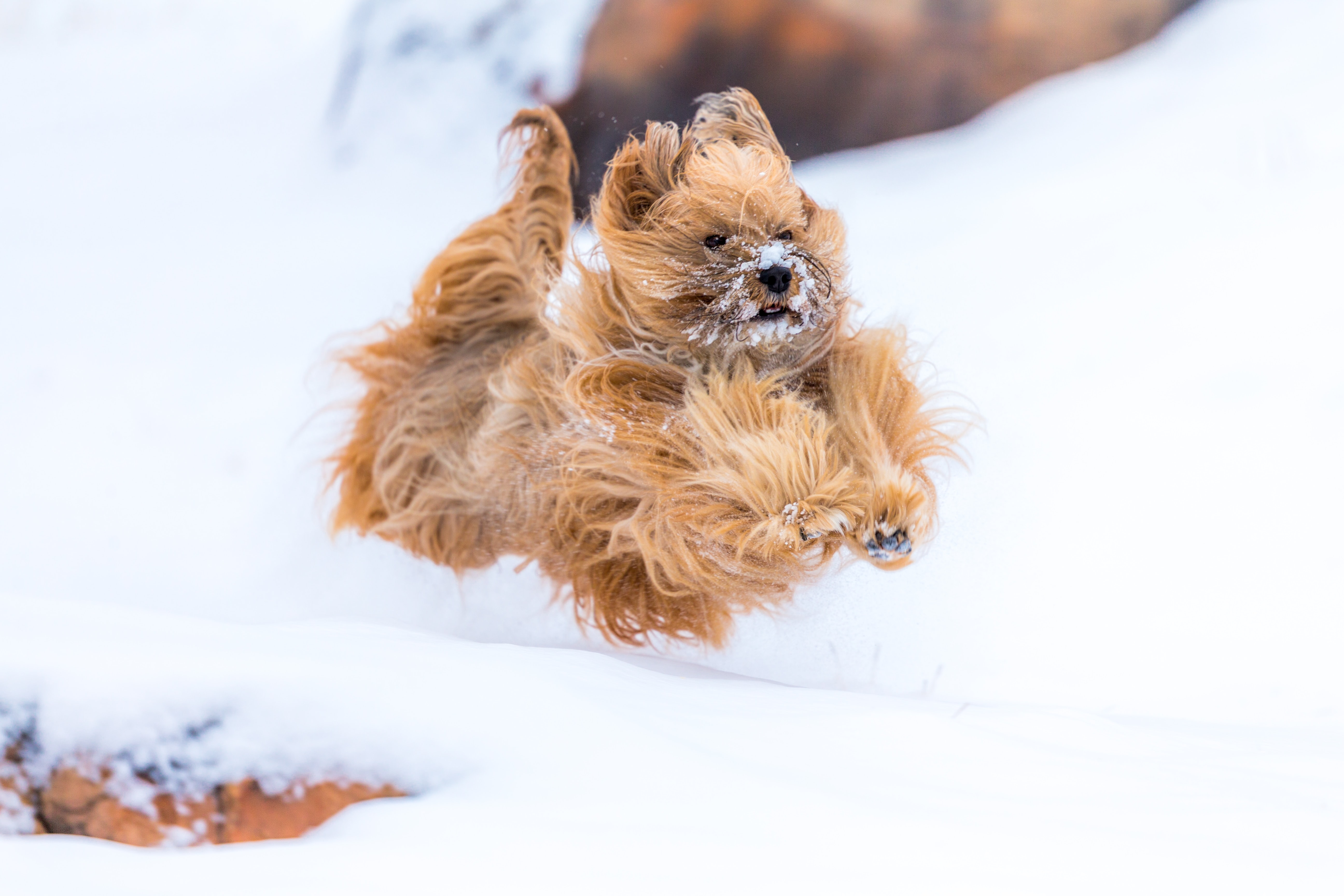 tan puppy on white surface