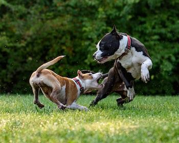 Can I Use Neosporin® On My Dog?