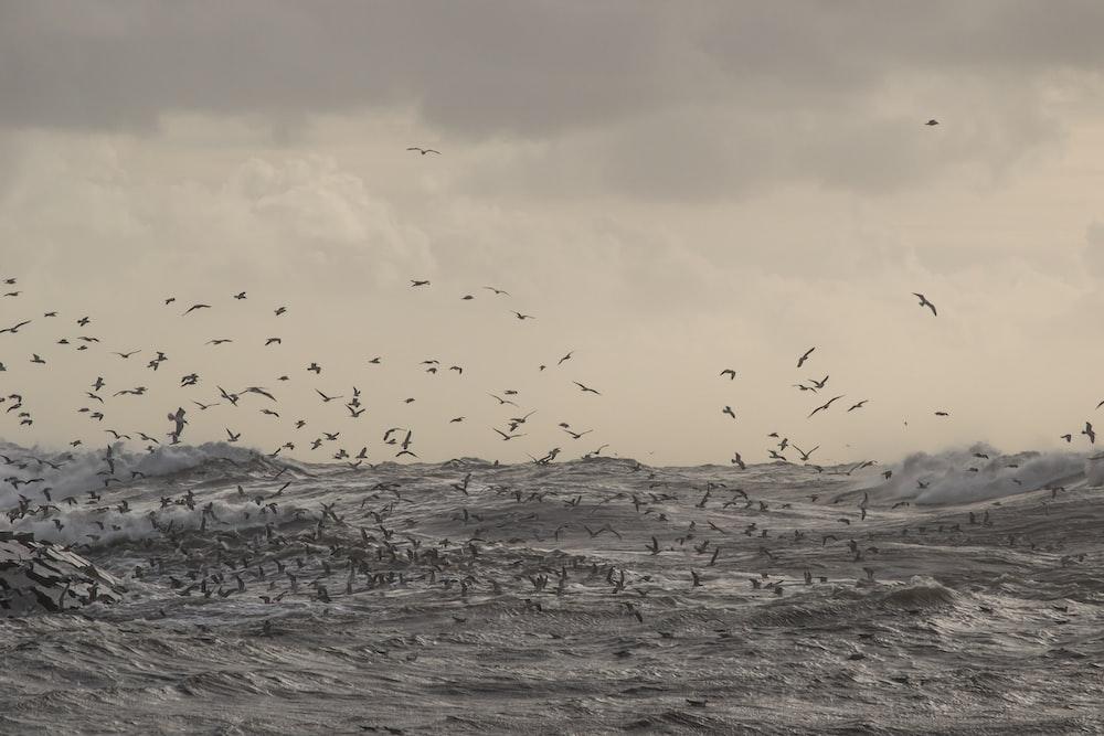 flock of birds flying over body of water