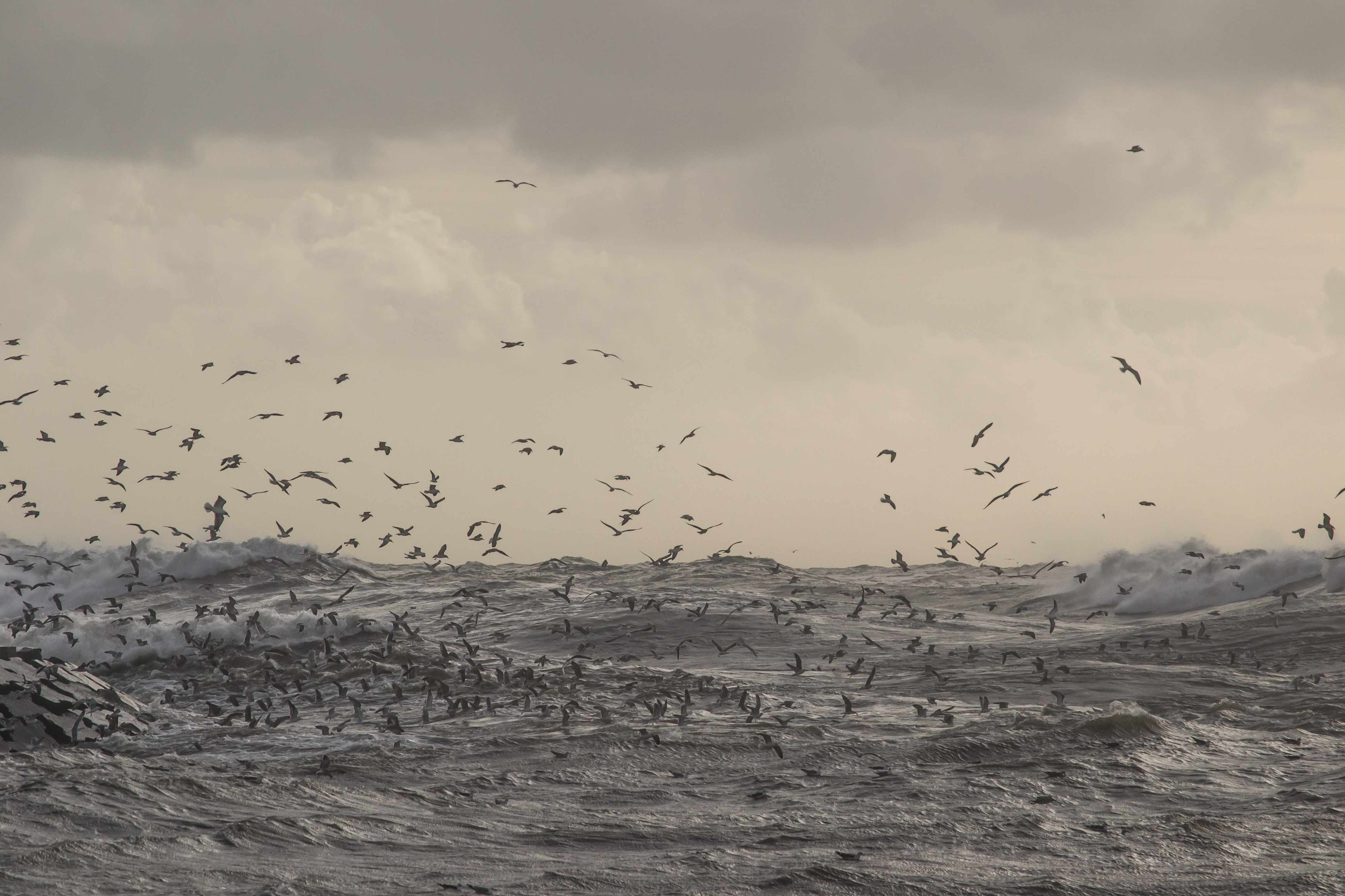 flock of birds flying over body of water
