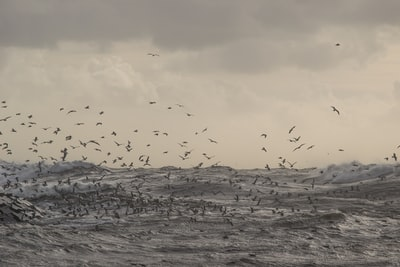 flock of birds flying over body of water tempest teams background
