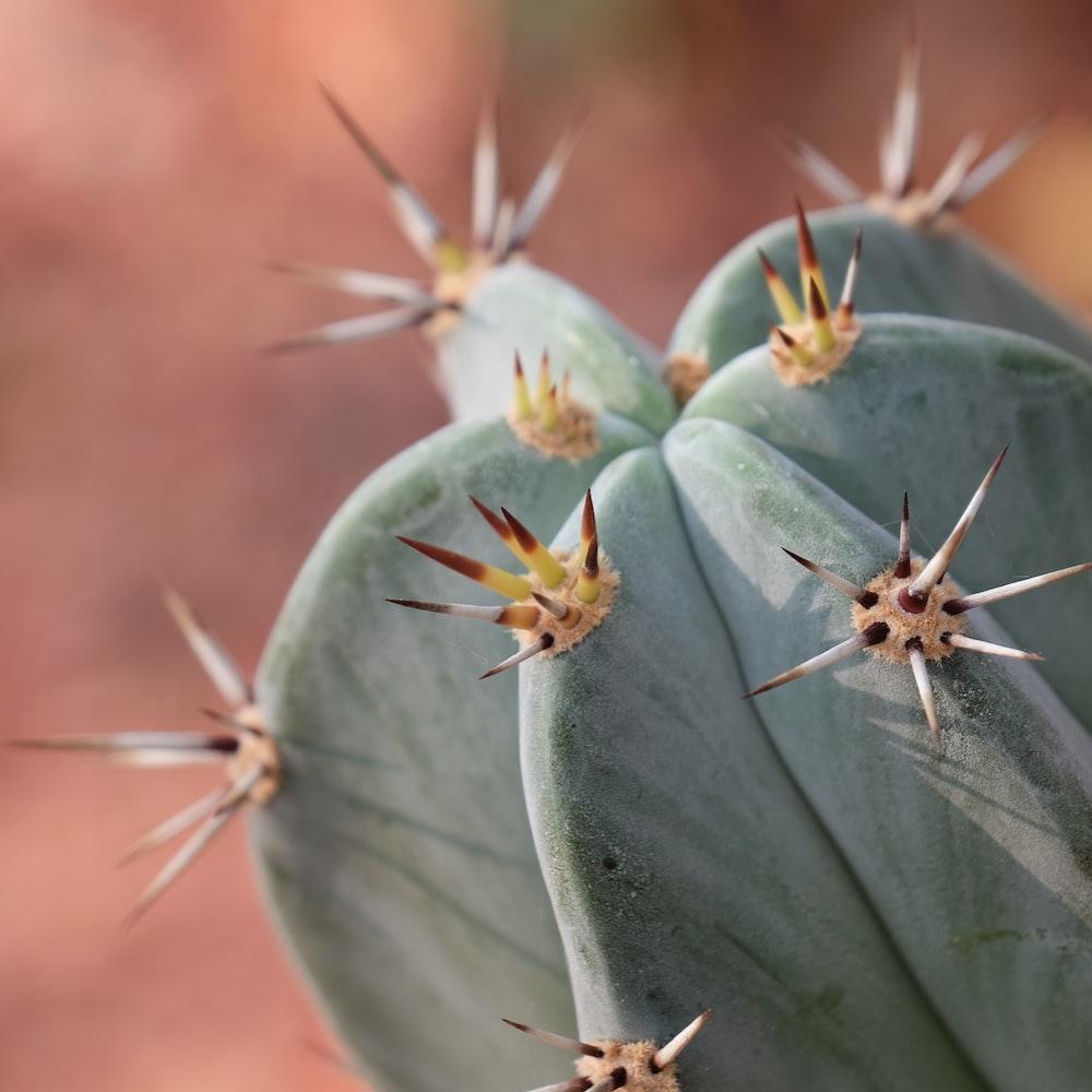 green cactus plant macro photography