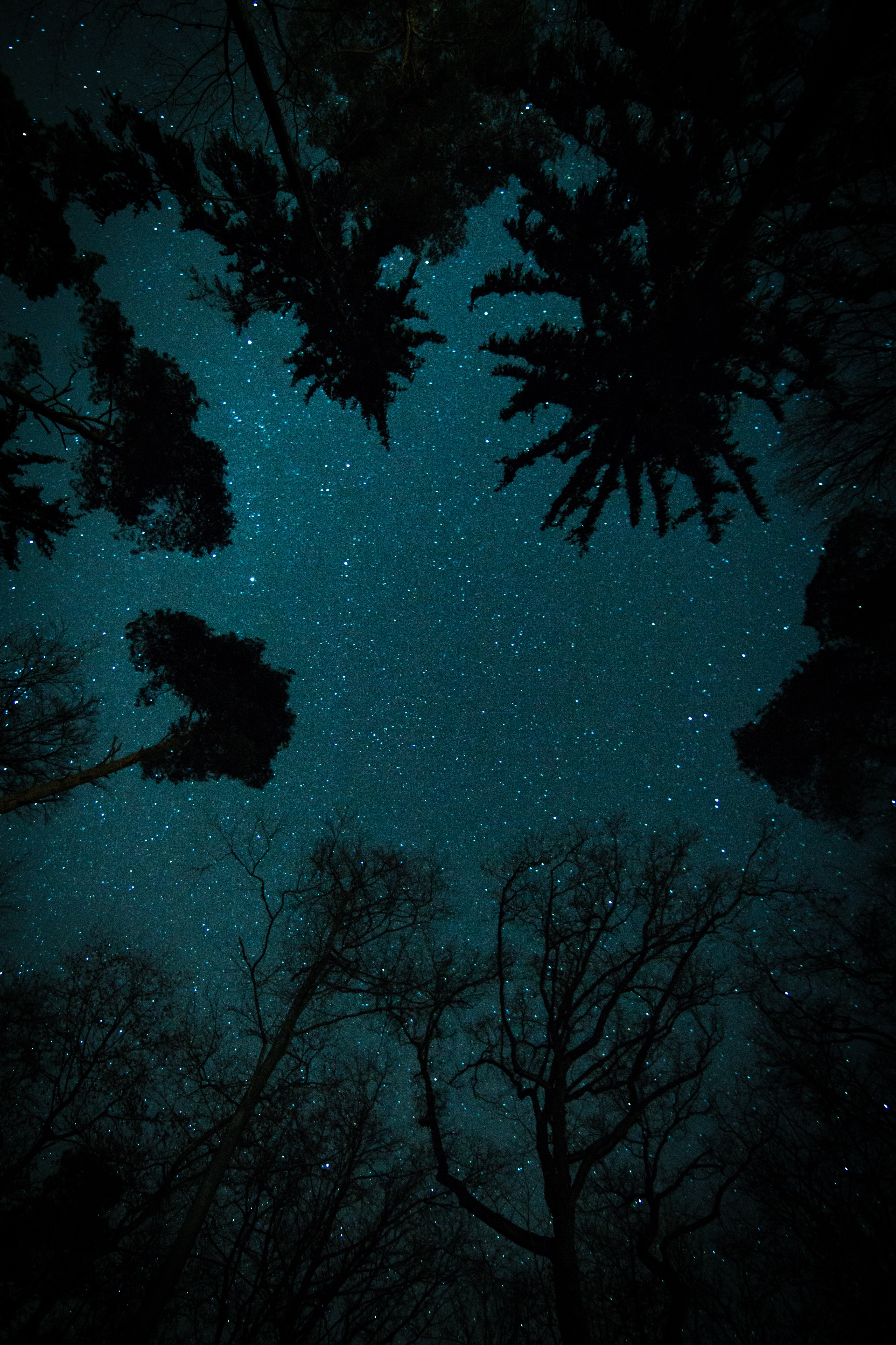 trees under starry sky