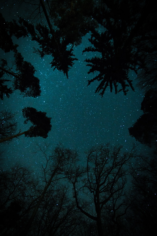 trees under starry sky